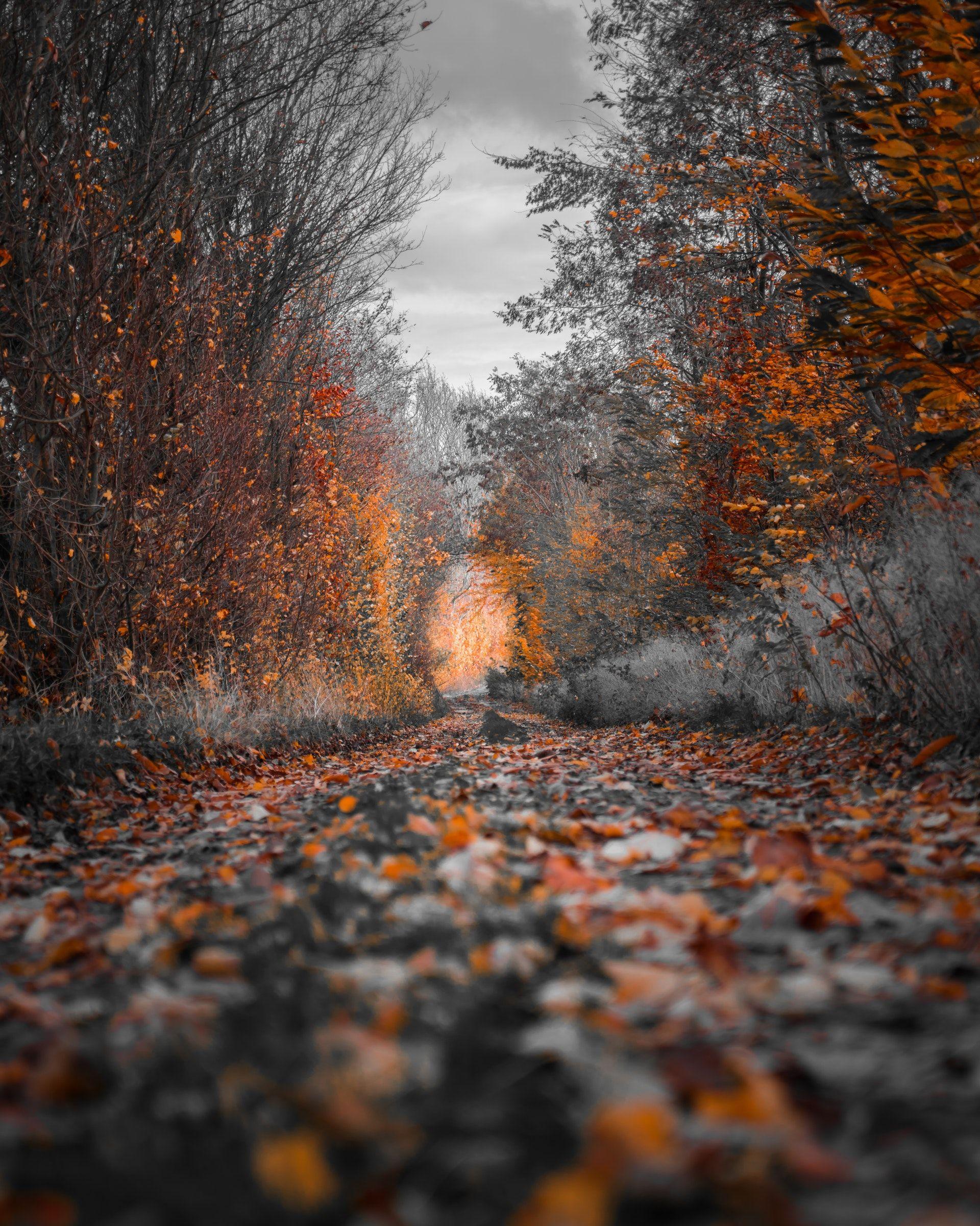 عکس زمینه درختان پاییز پس زمینه