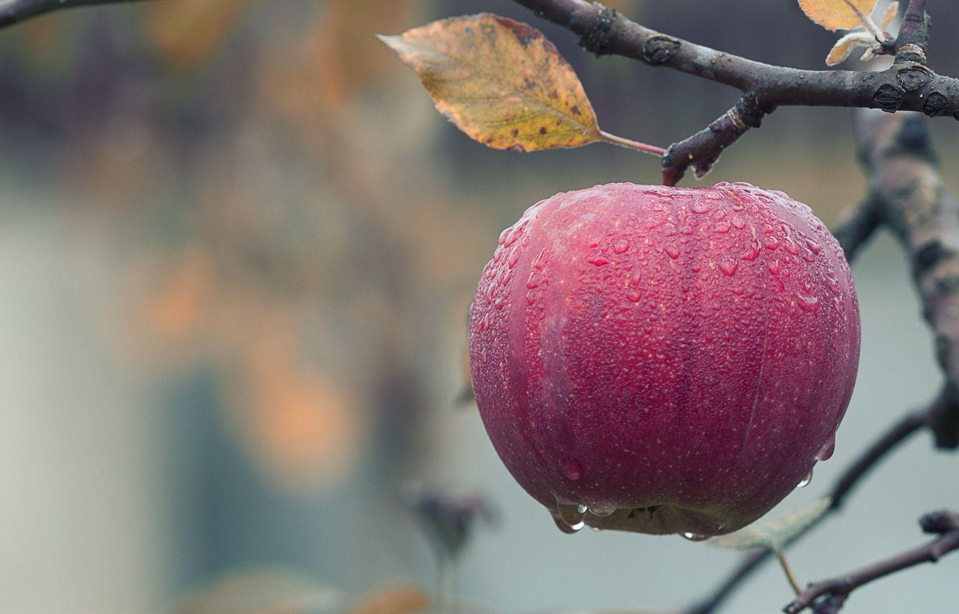 عکس زمینه نمای نزدیک از میوه آویز در درخت پس زمینه