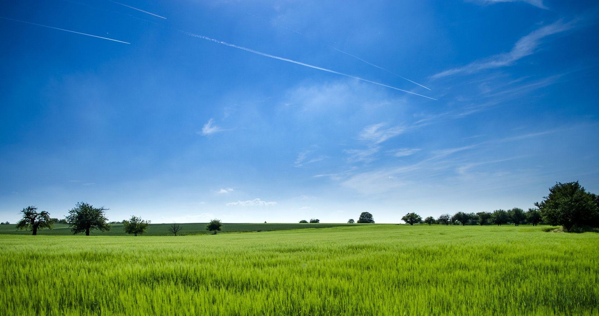 عکس زمینه پانوراما از مزرعه سرسبز پس زمینه