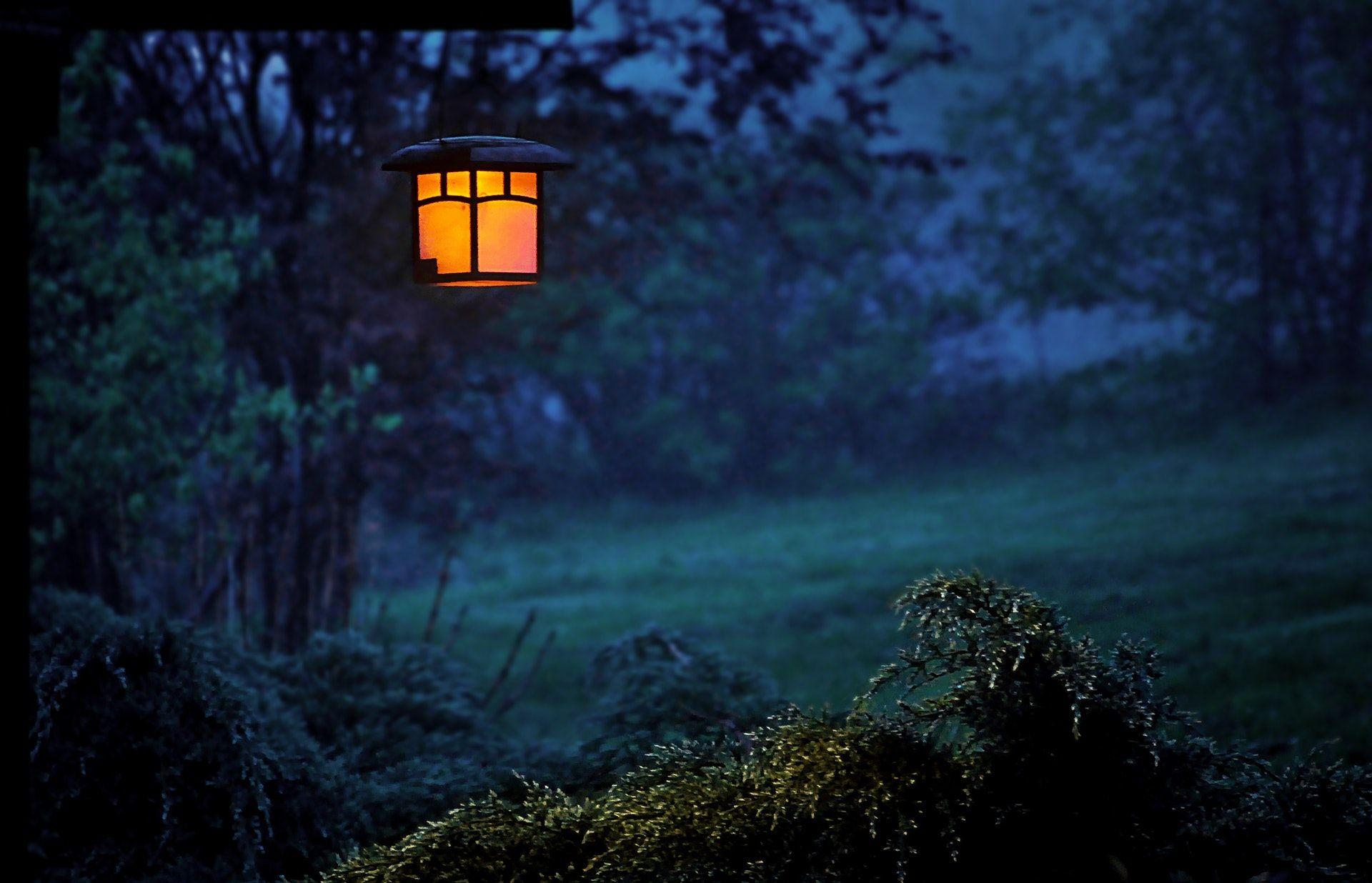 عکس زمینه فانوس روشن در جنگل تاریک پس زمینه