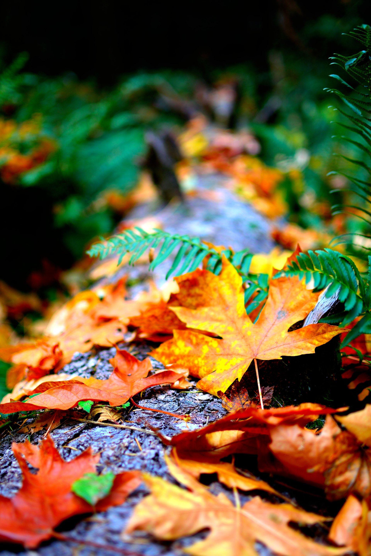 عکس زمینه برگ های خشک پاییزی پس زمینه