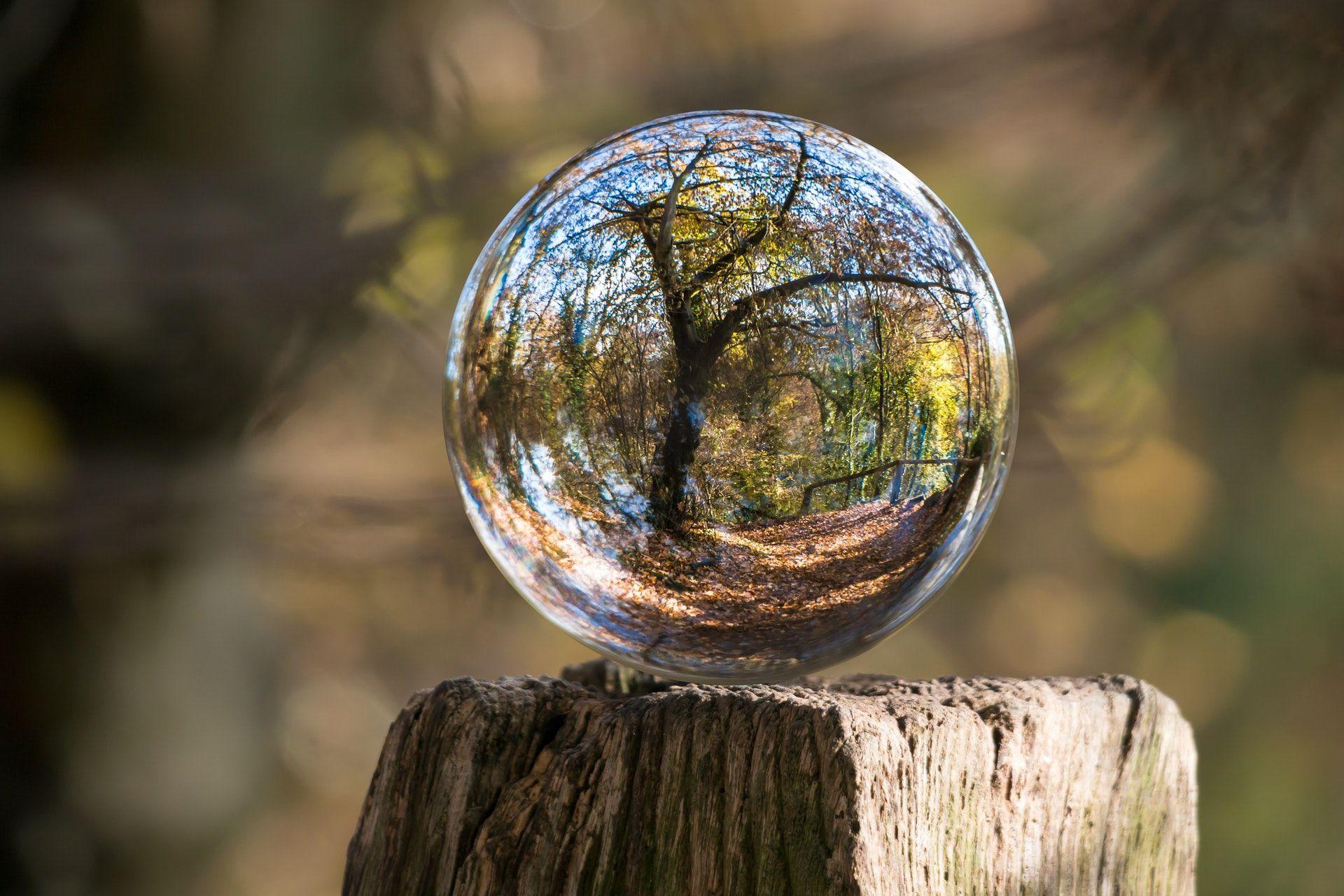 عکس زمینه درخت در حباب پس زمینه