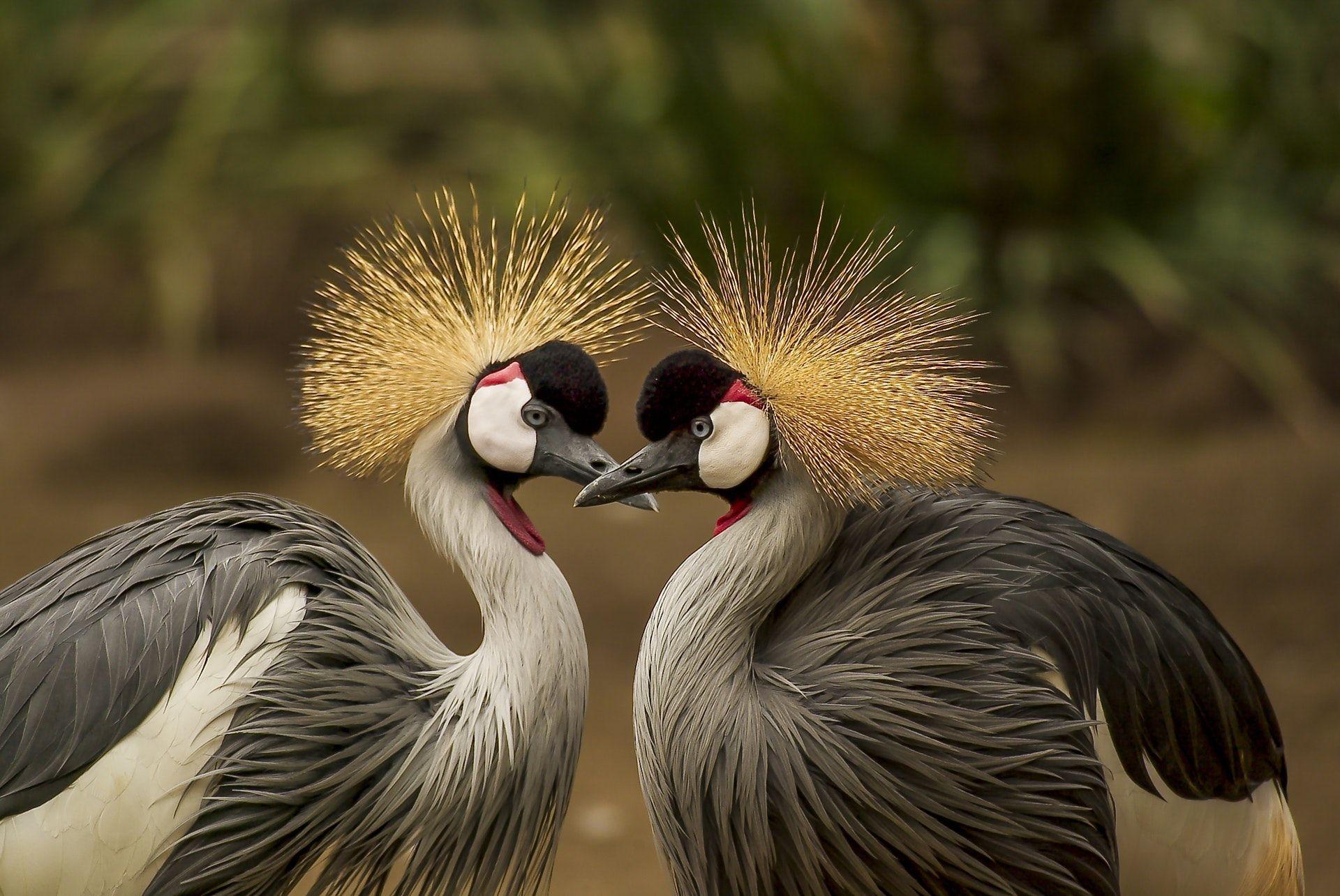 عکس زمینه پرندگان خاکستری و سیاه پس زمینه