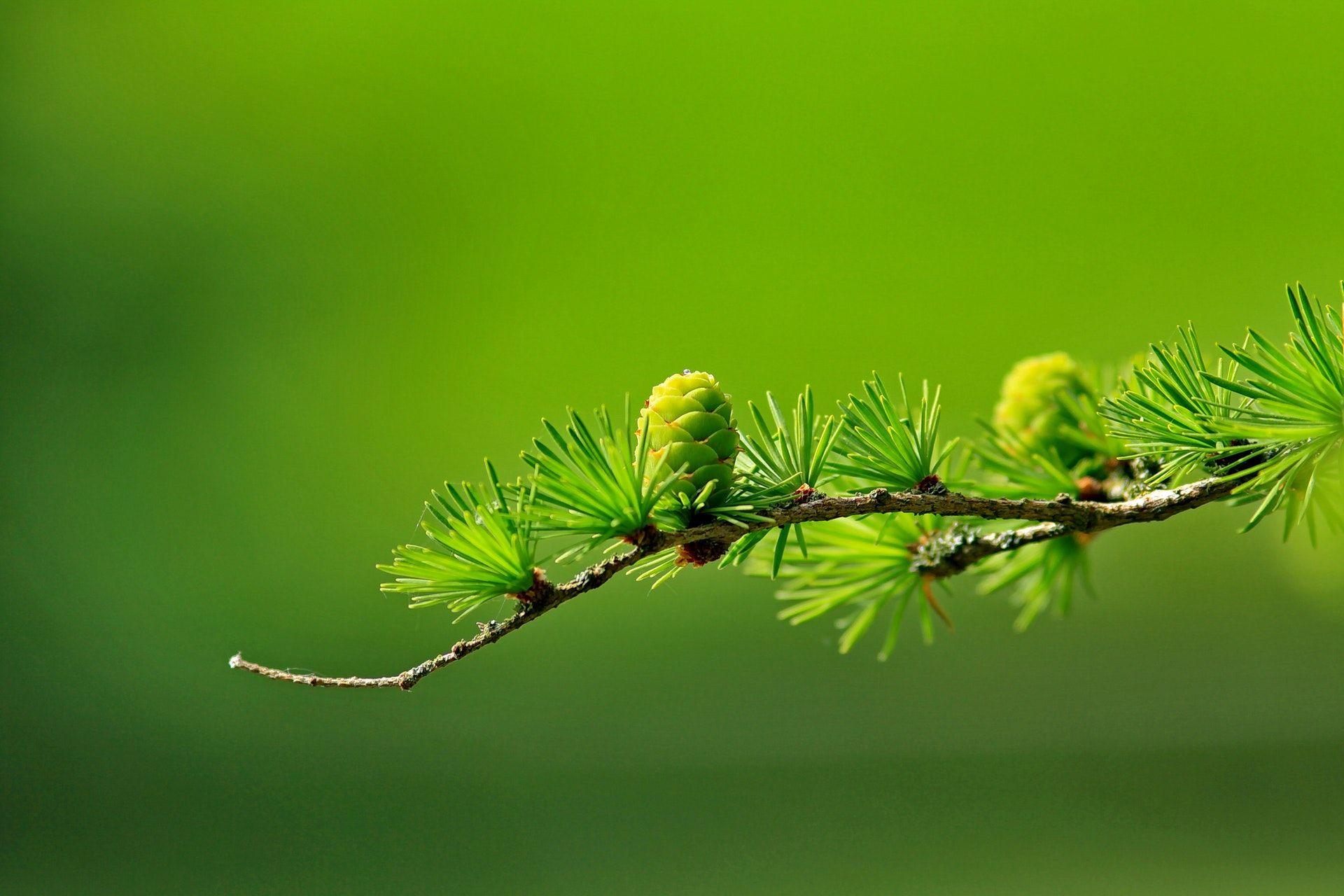 عکس زمینه شاخه و برگ سبز پس زمینه