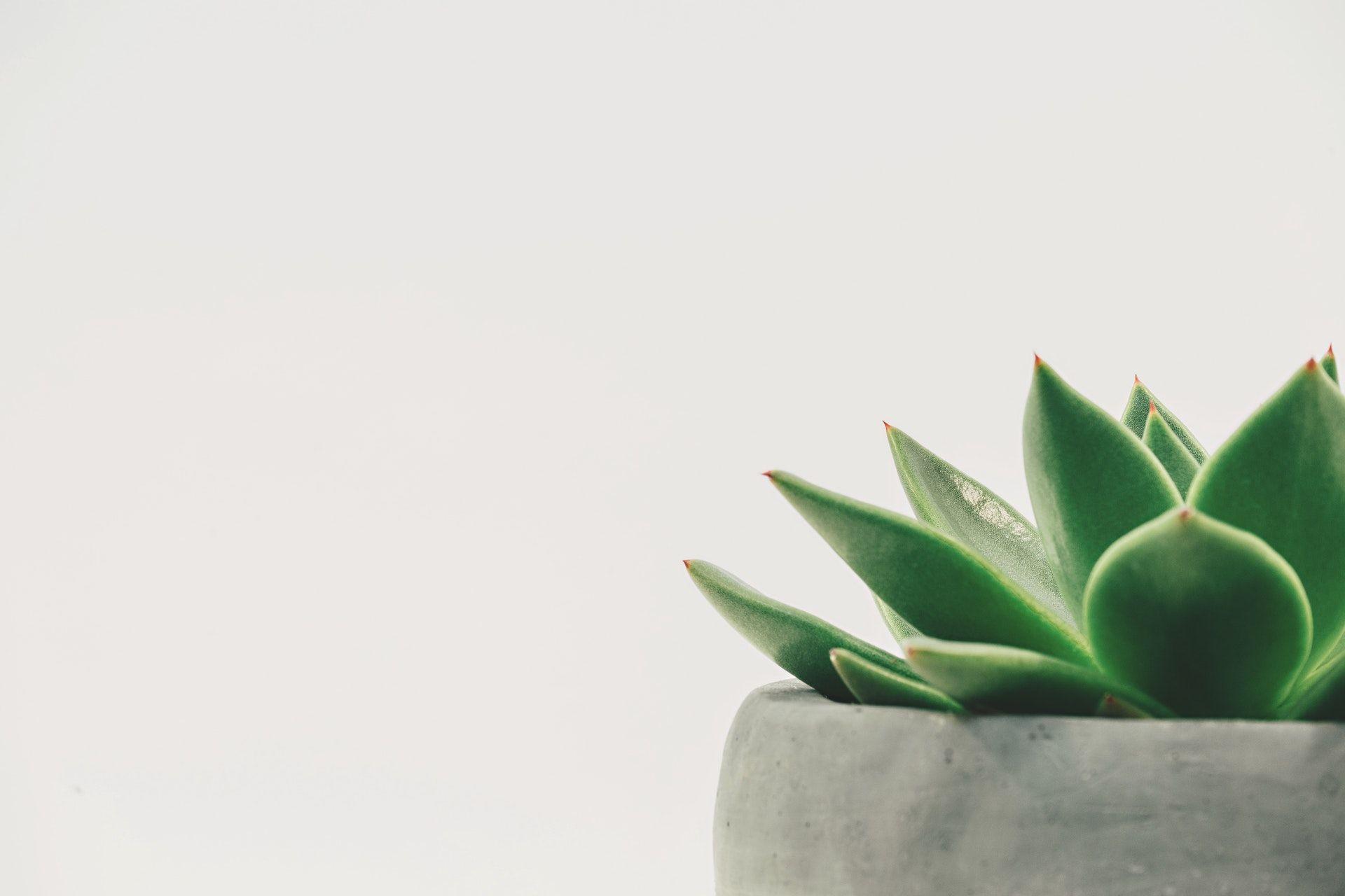 عکس زمینه گیاه شاداب در گلدان پس زمینه