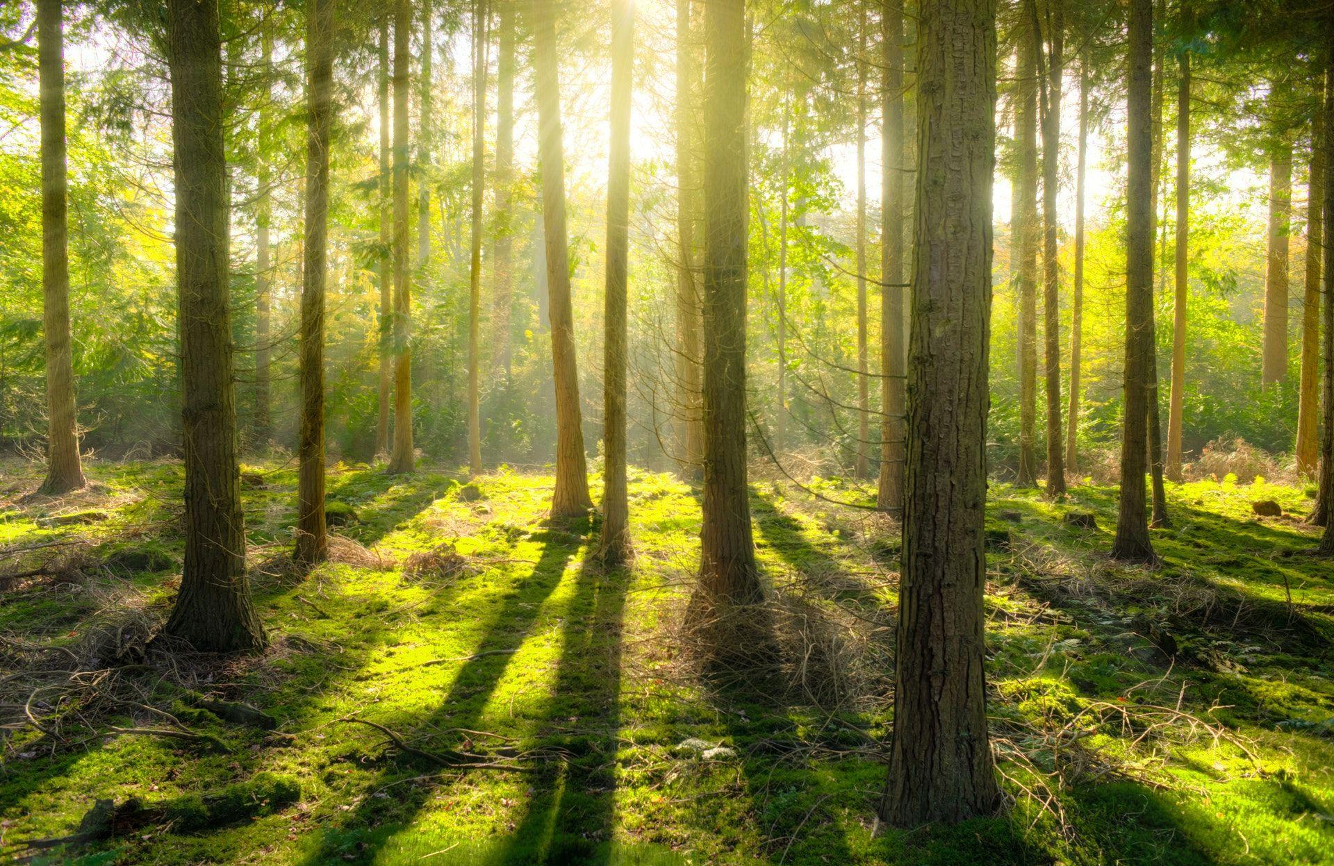 عکس زمینه جنگل و تابش نور پس زمینه