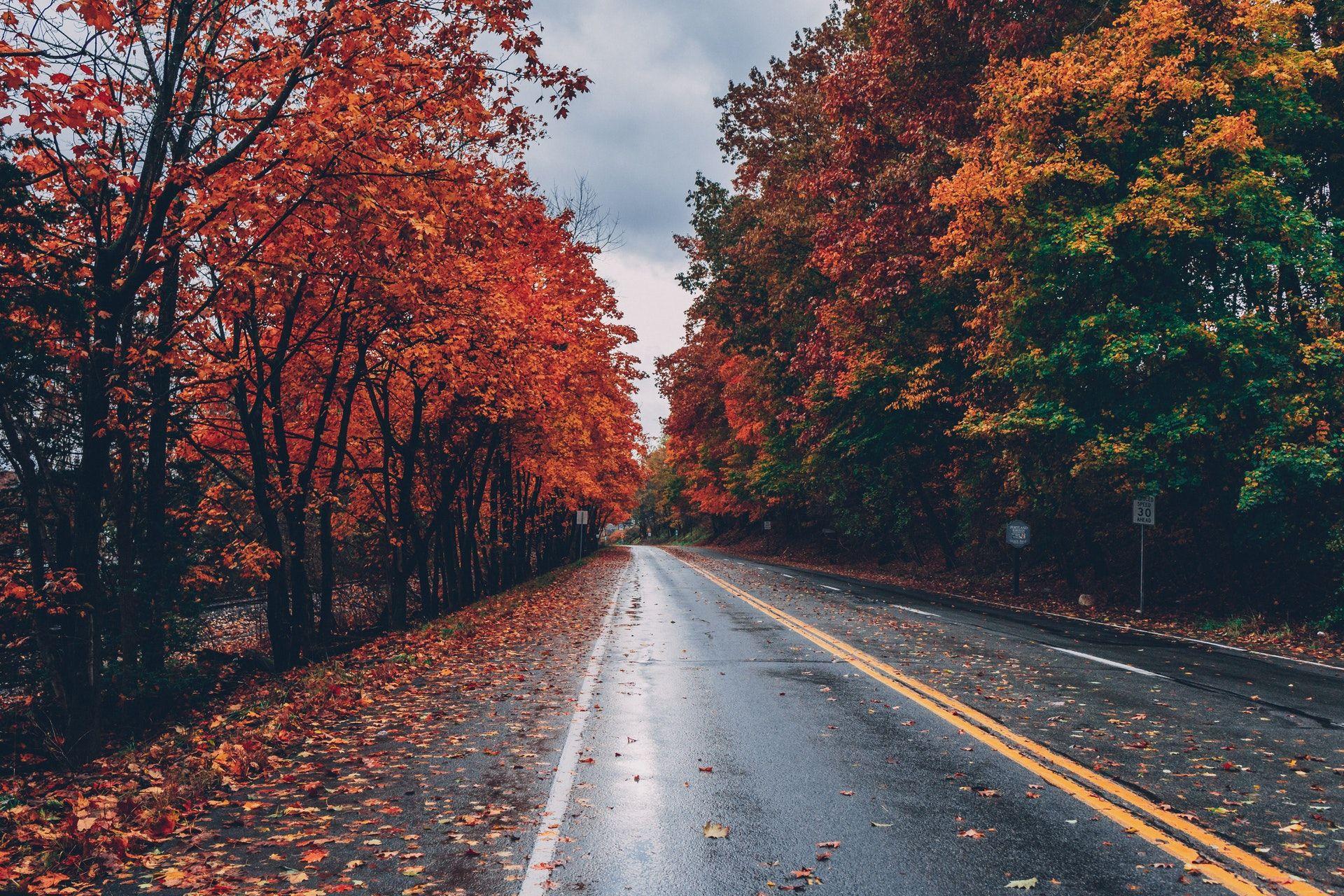 عکس زمینه جاده پاییزی عاشقانه پس زمینه