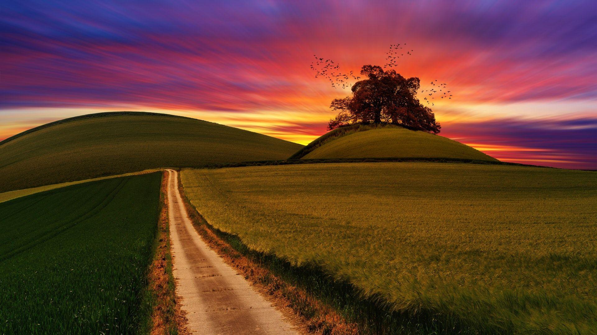 عکس زمینه هنری از مزرعه در غروب پس زمینه
