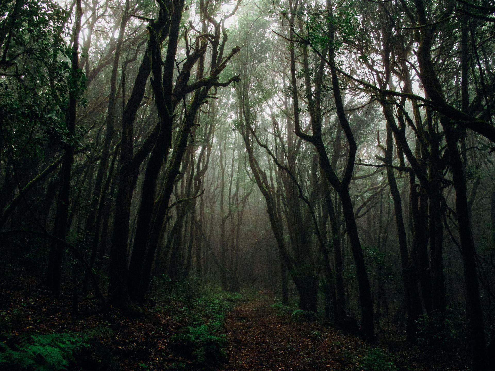 عکس زمینه جنگل تاریک با مه پس زمینه