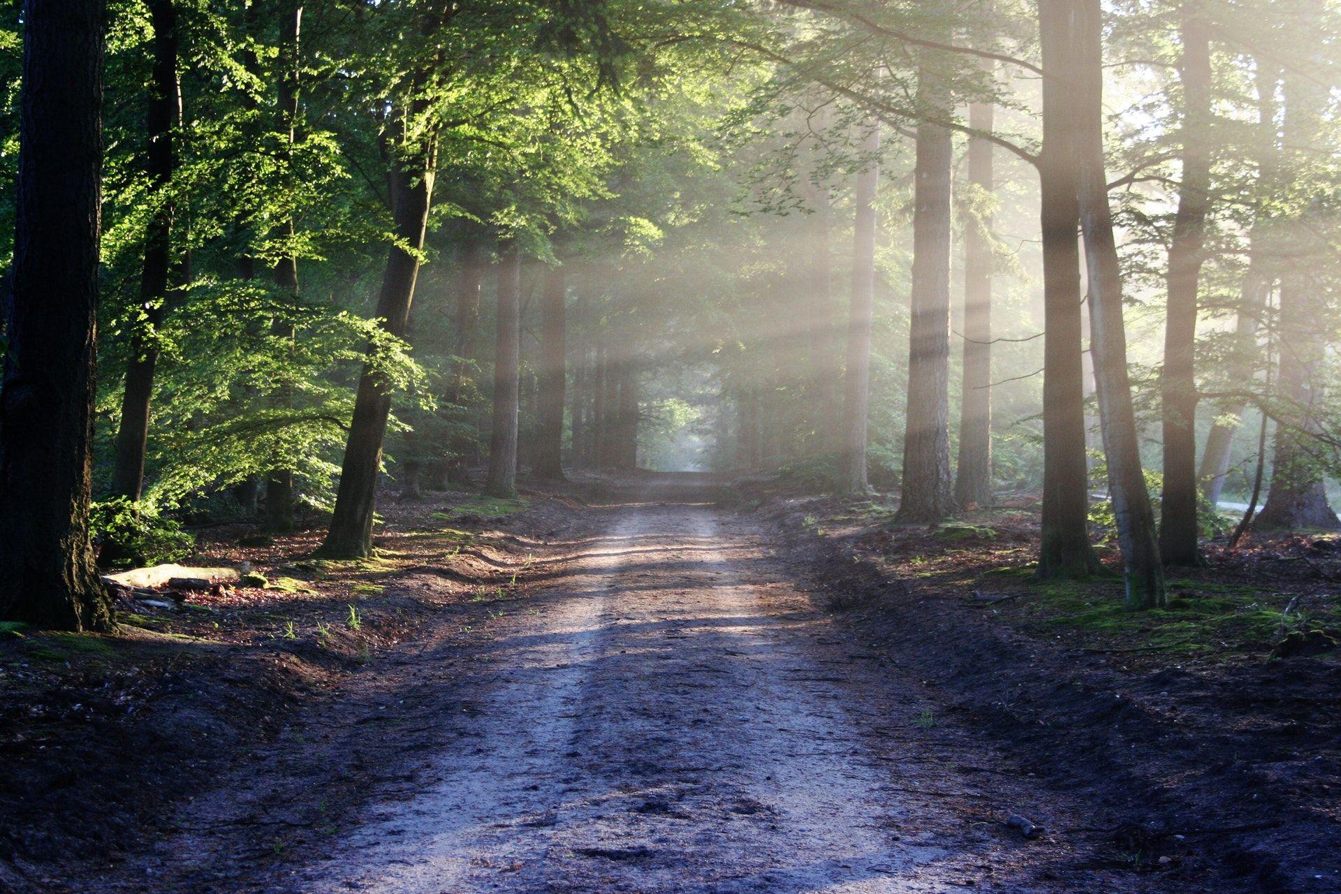 عکس زمینه نور خورشید بین درختان کنار جاده پس زمینه