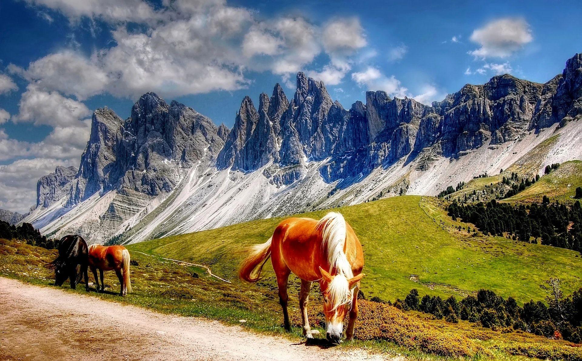 عکس زمینه اسب در طبیعت بکر پس زمینه
