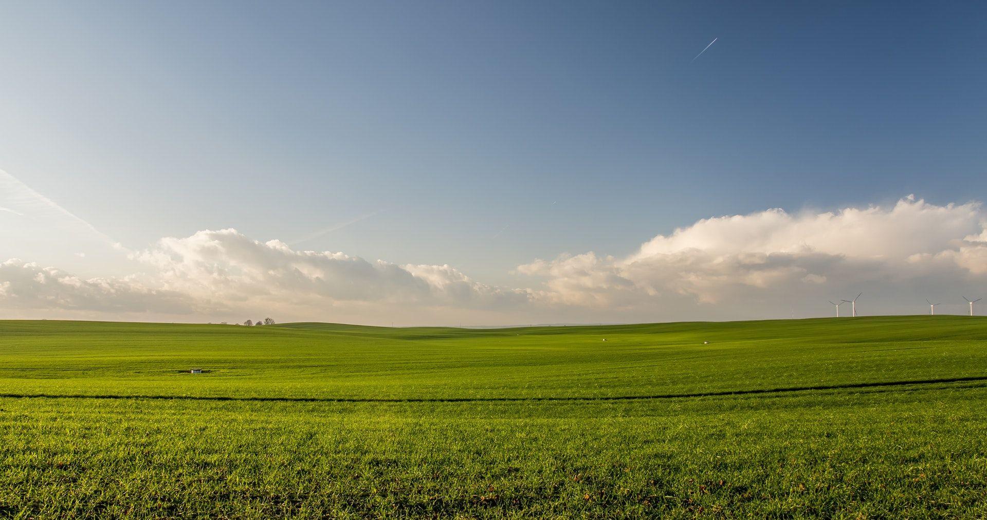 عکس زمینه چمن سبز پس زمینه