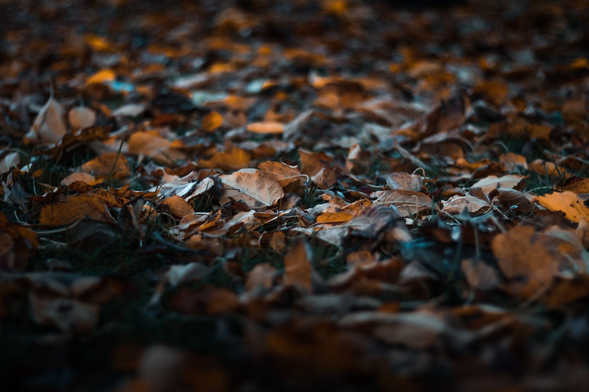 عکس زمینه برگ های زرد افتاده پس زمینه