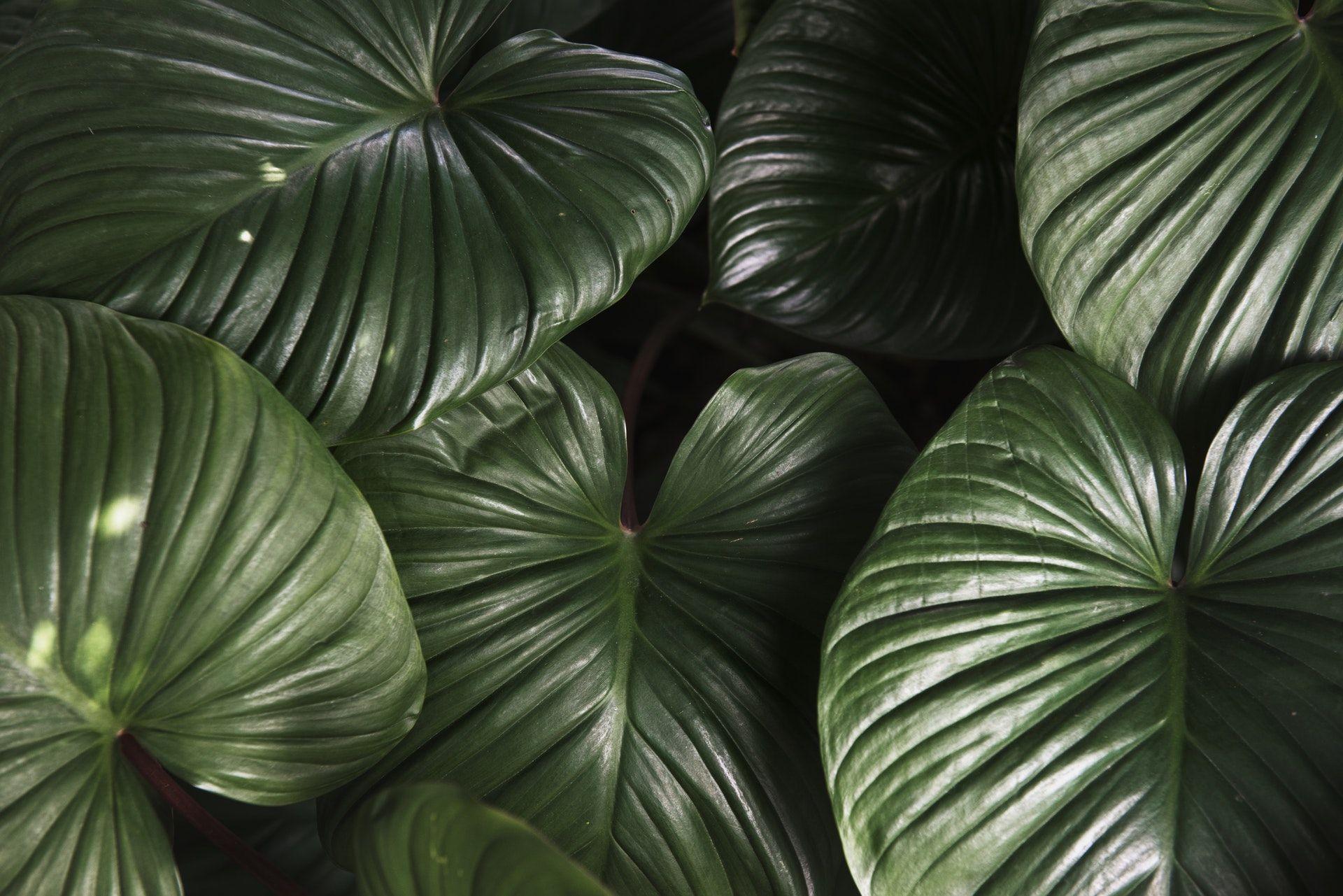 عکس زمینه برگ سبز با طراوت پس زمینه