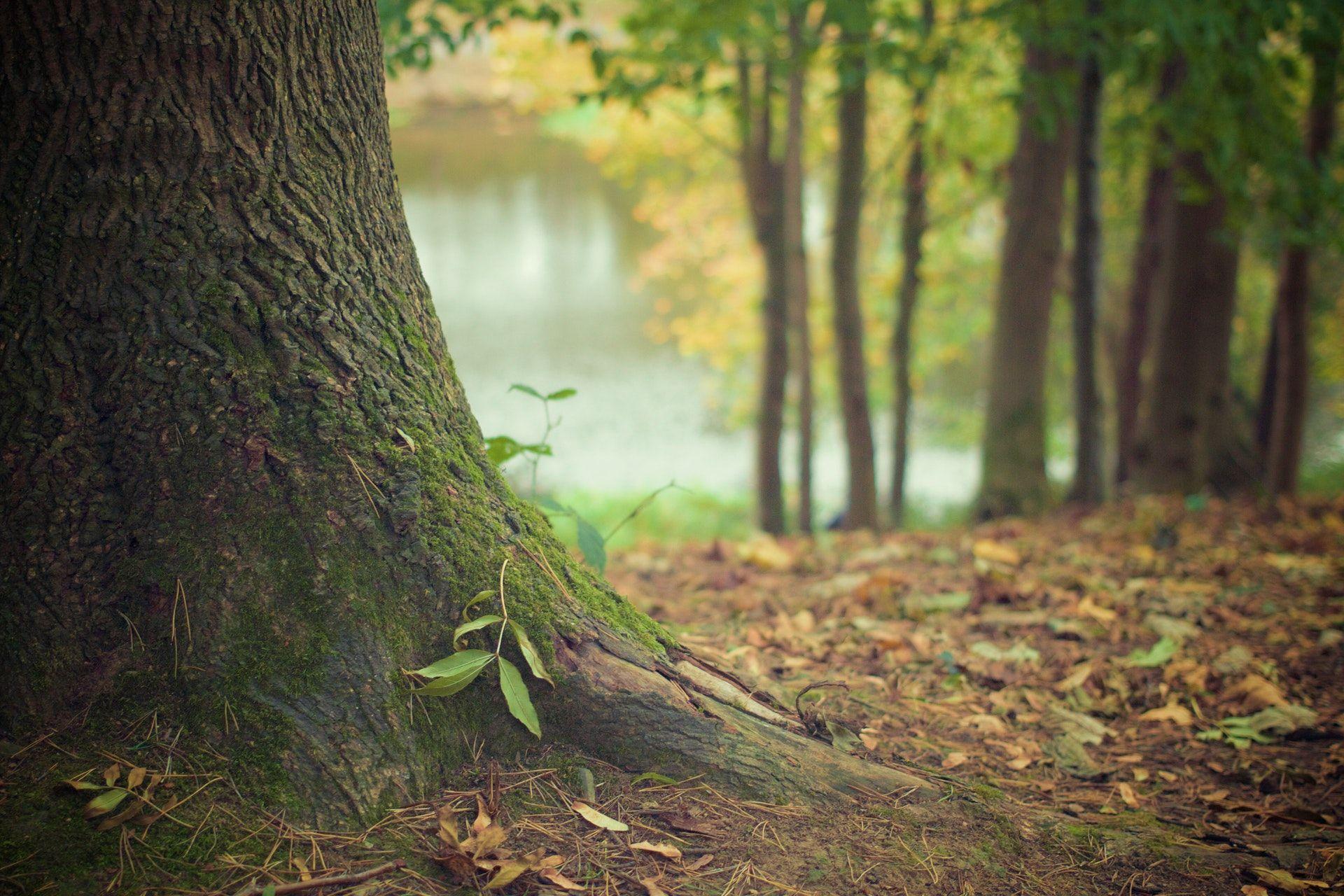 عکس زمینه برگهای ریخته شده درخت در جنگل پس زمینه