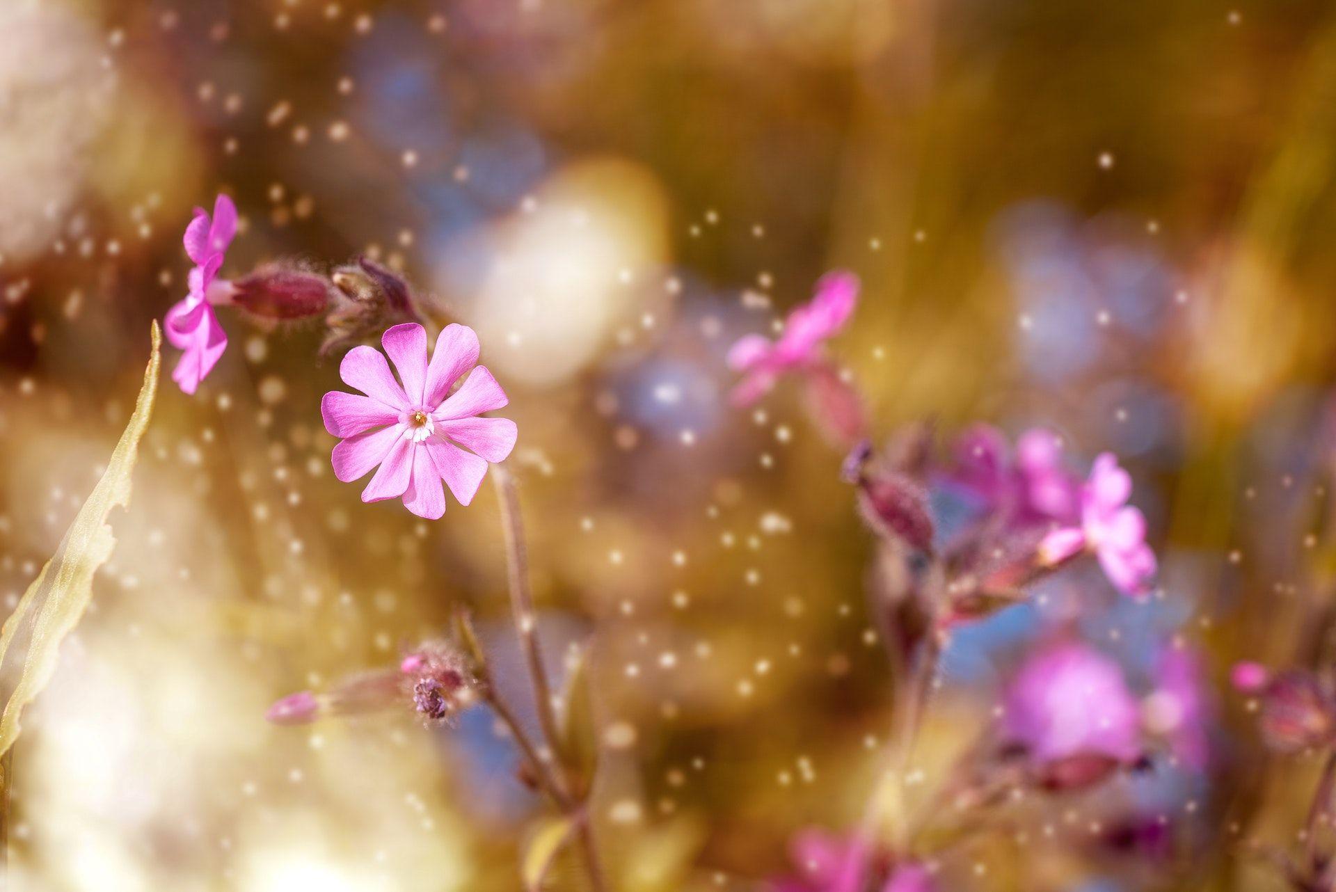 عکس زمینه گل های صورتی زیبا پس زمینه