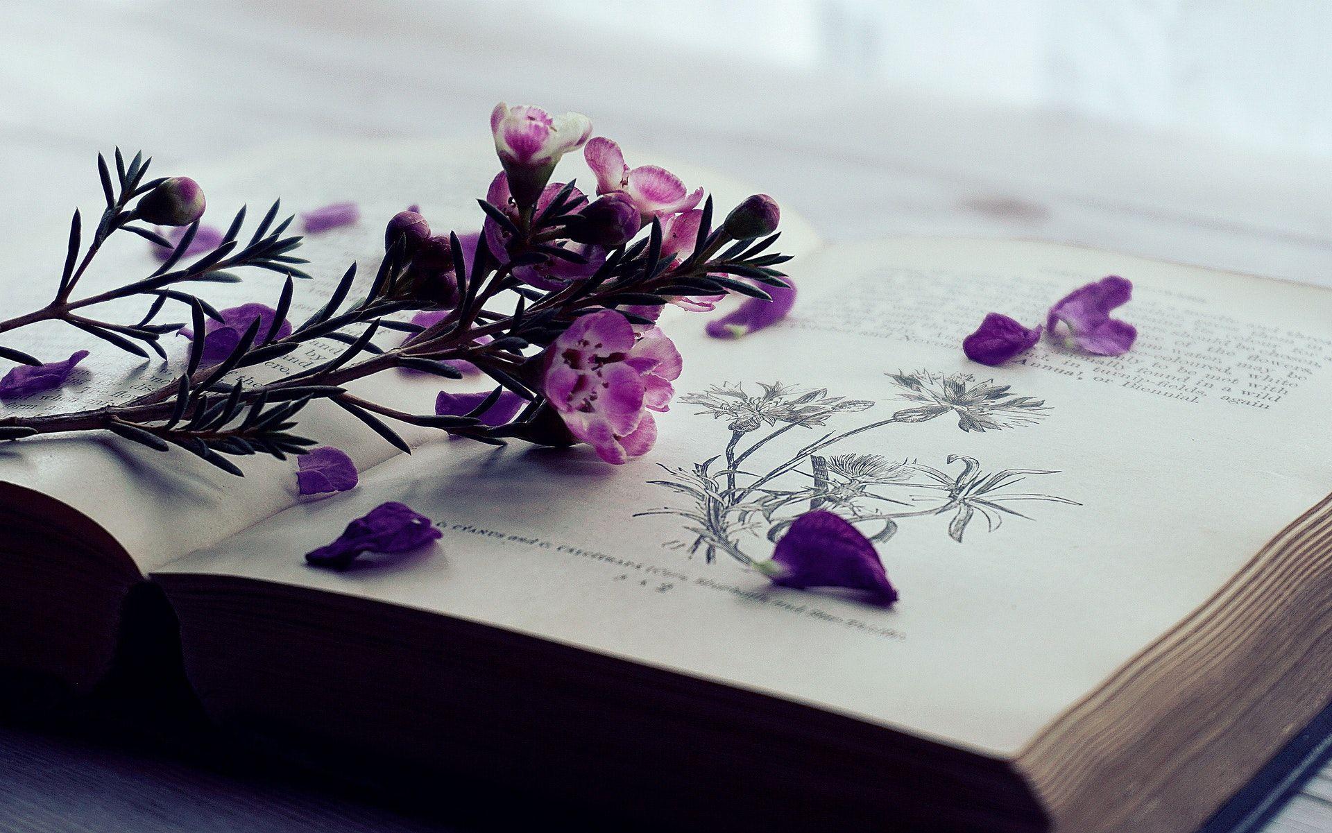 عکس زمینه گل بنفش لای کتاب پس زمینه