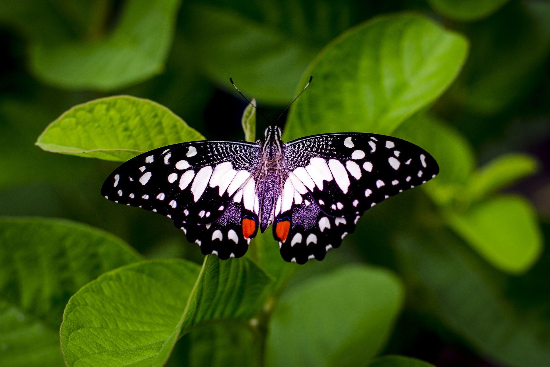 عکس زمینه کلوزآپ از یک پروانه پس زمینه