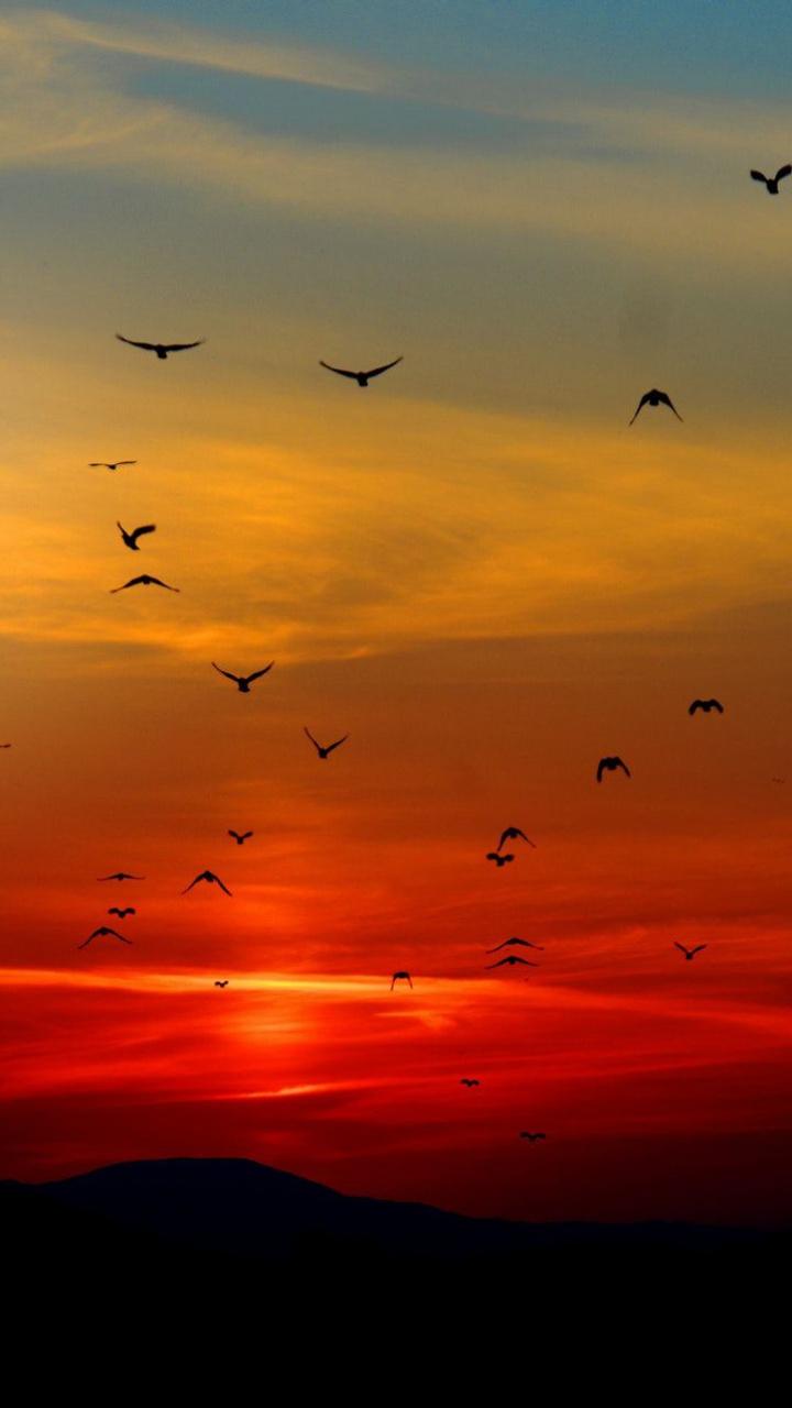 عکس زمینه پرواز پرندگان فراز آسمان نارنجی غروب پس زمینه