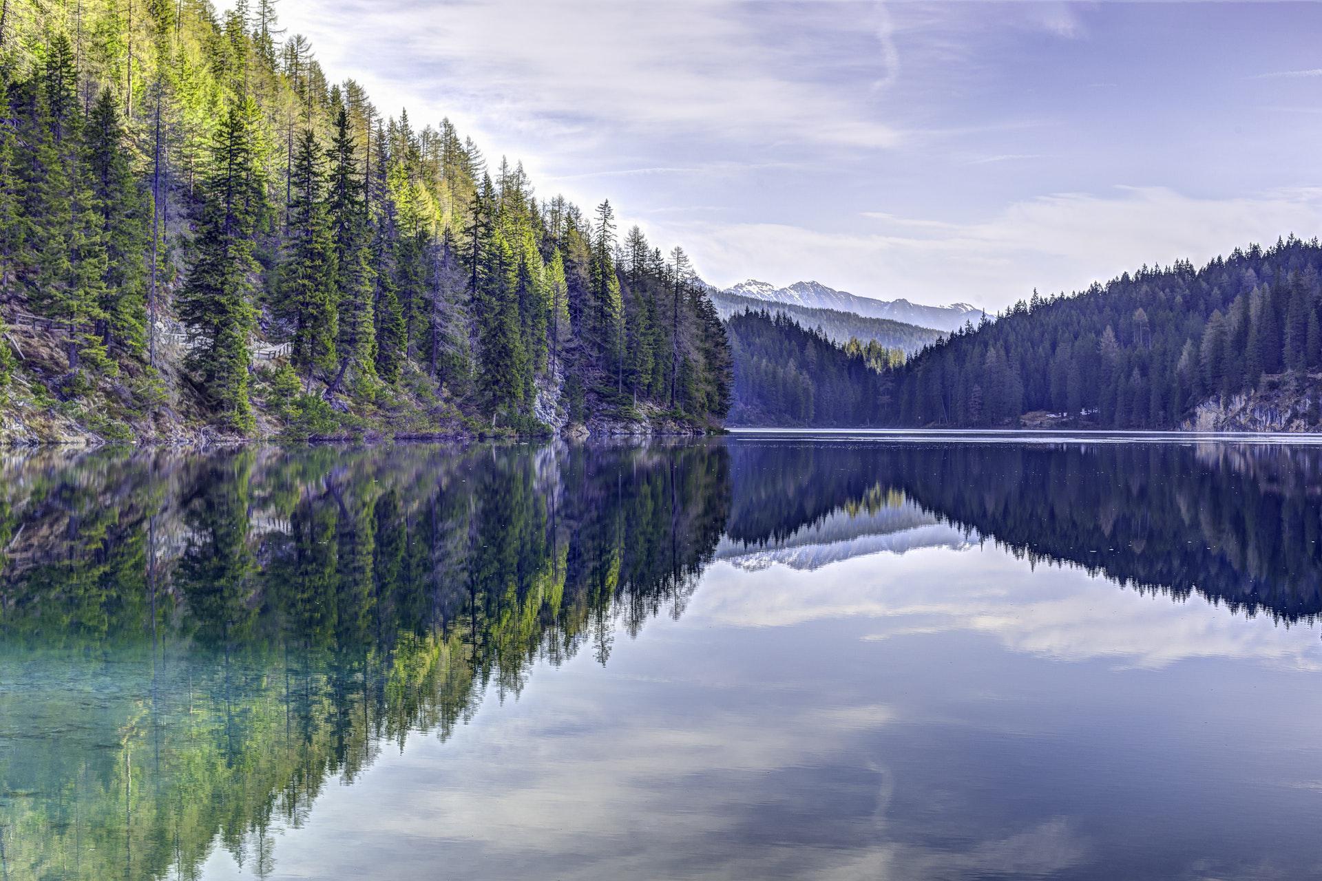 عکس زمینه درختان کاج سبز در کنار دریاچه پس زمینه