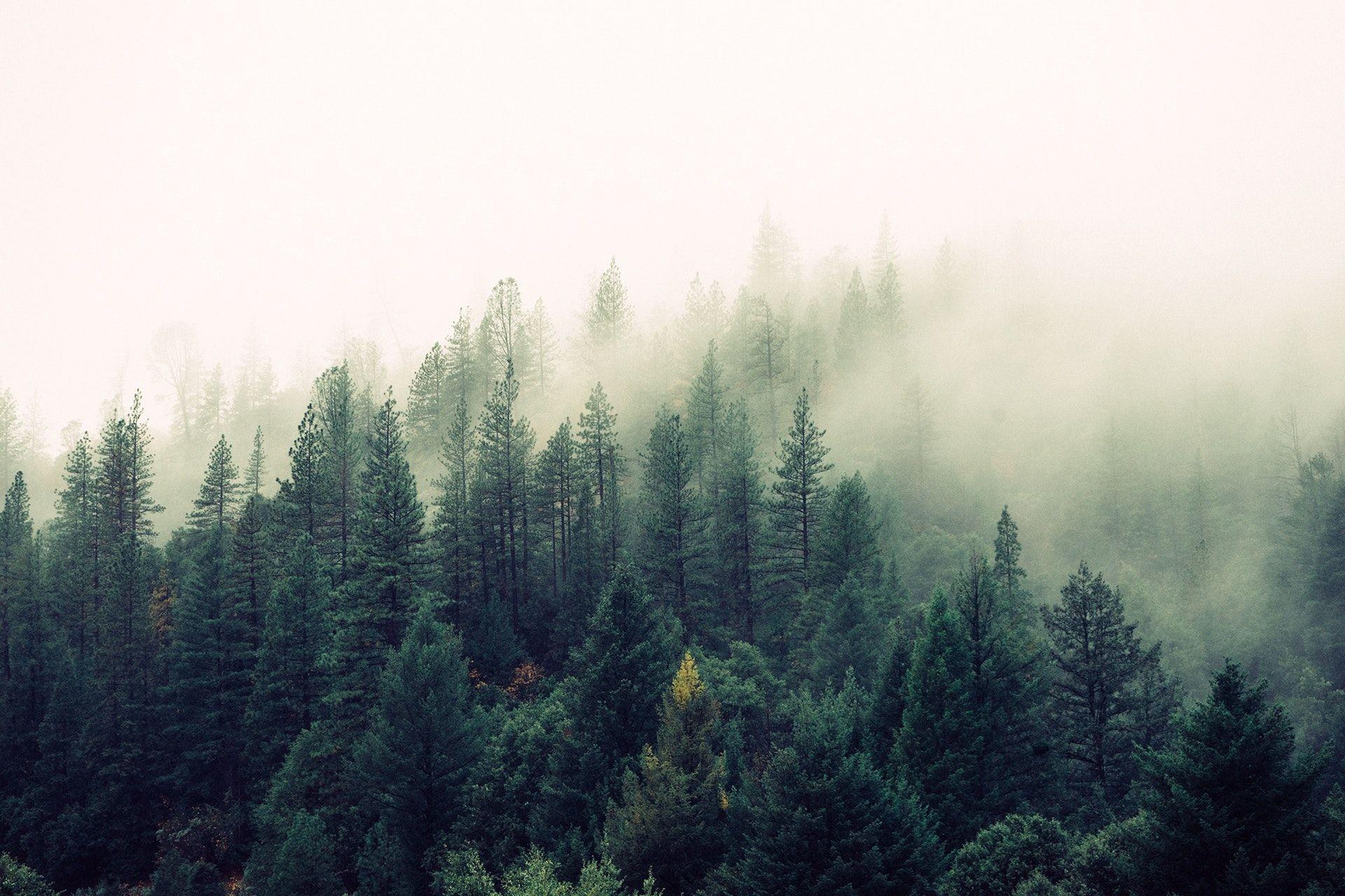 عکس زمینه درختان در جنگل سبز و مه پس زمینه
