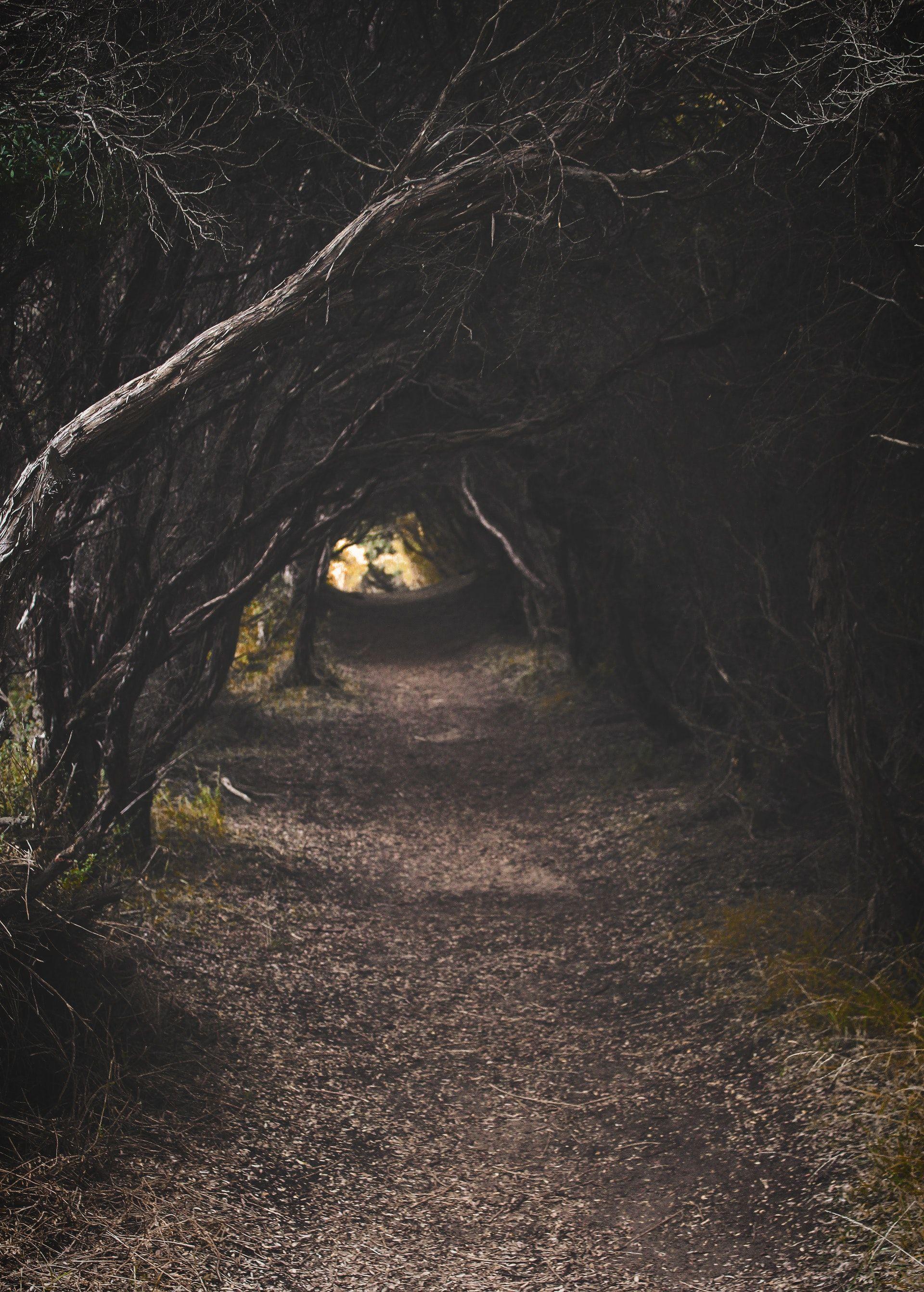 عکس زمینه مسیر درخت پس زمینه