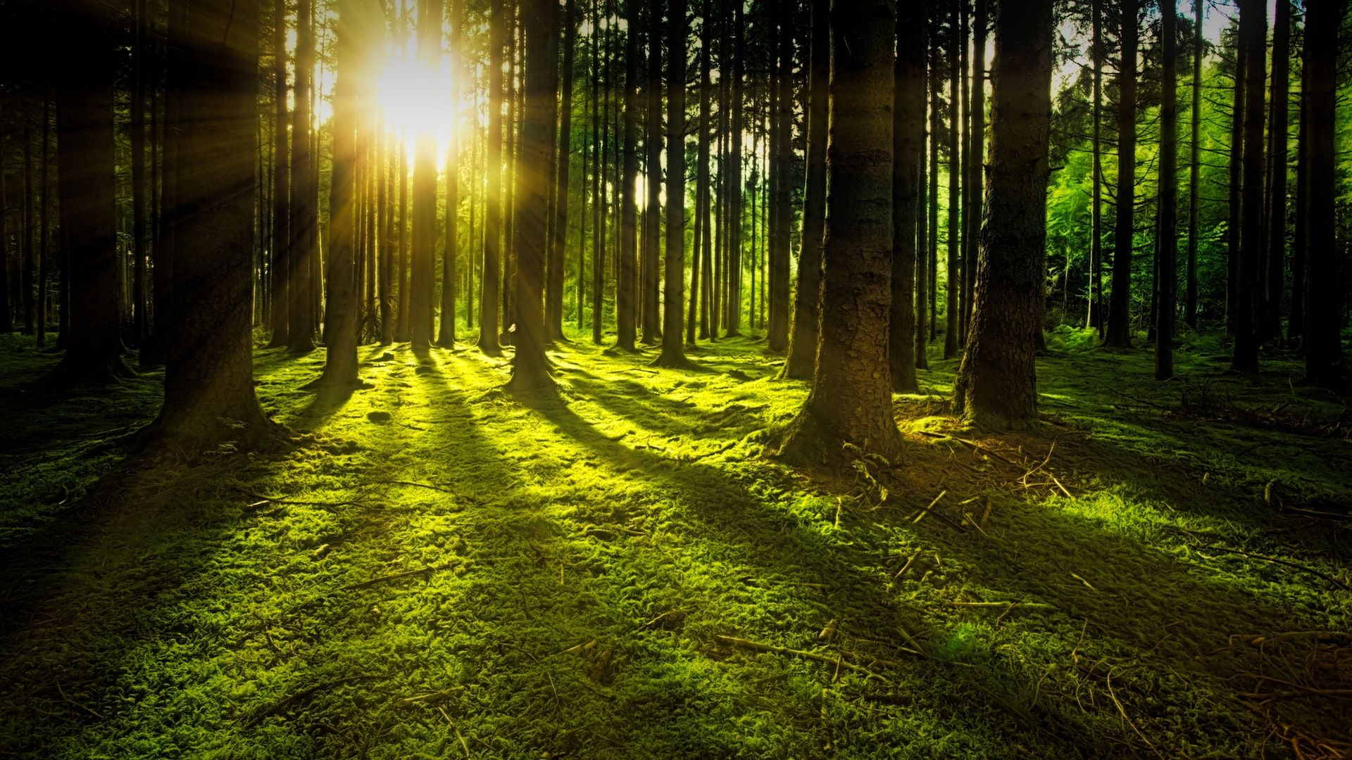 عکس زمینه غروب آفتاب در جنگل پس زمینه