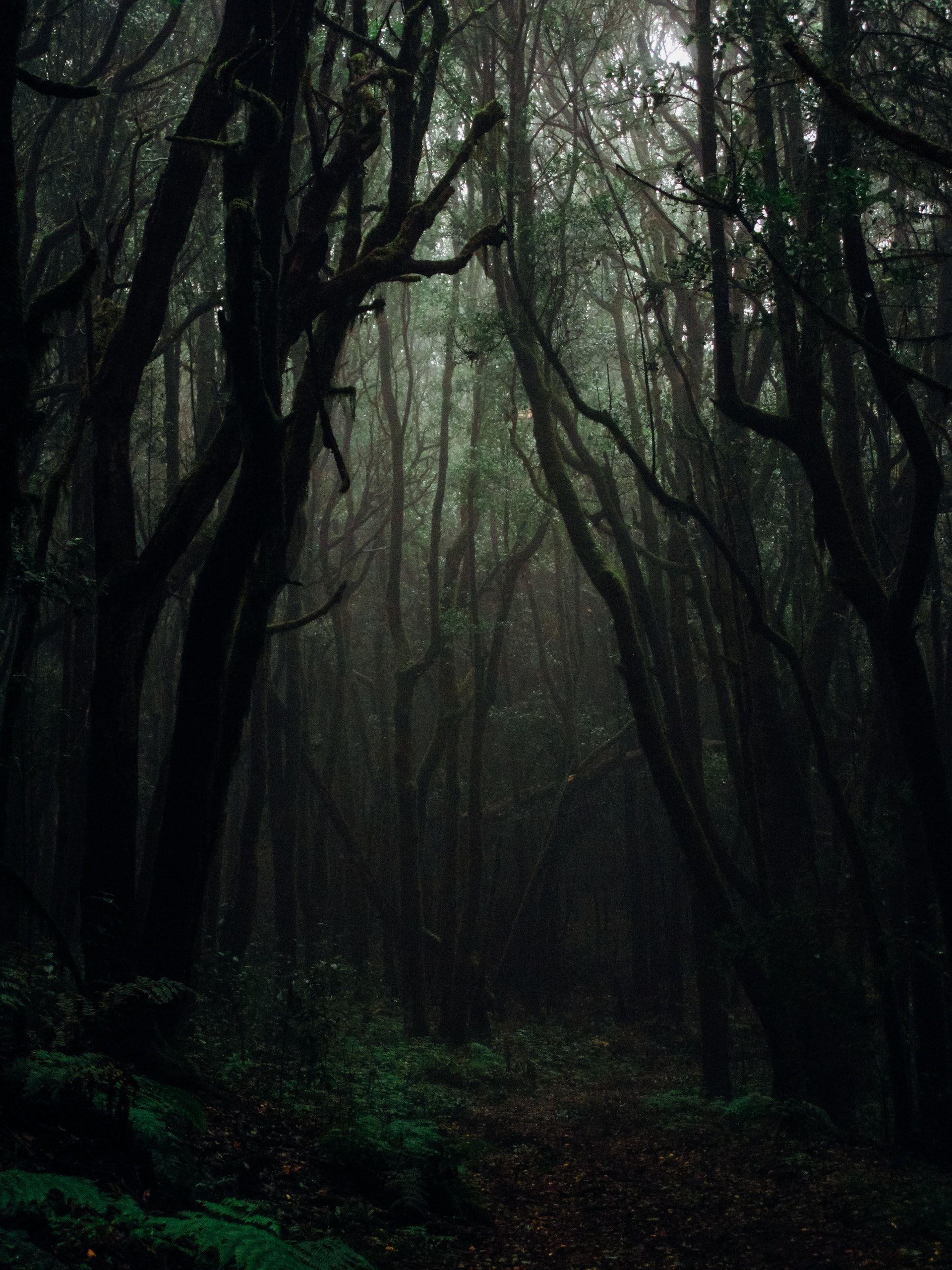 عکس زمینه جنگل ترسناک و تاریک پس زمینه