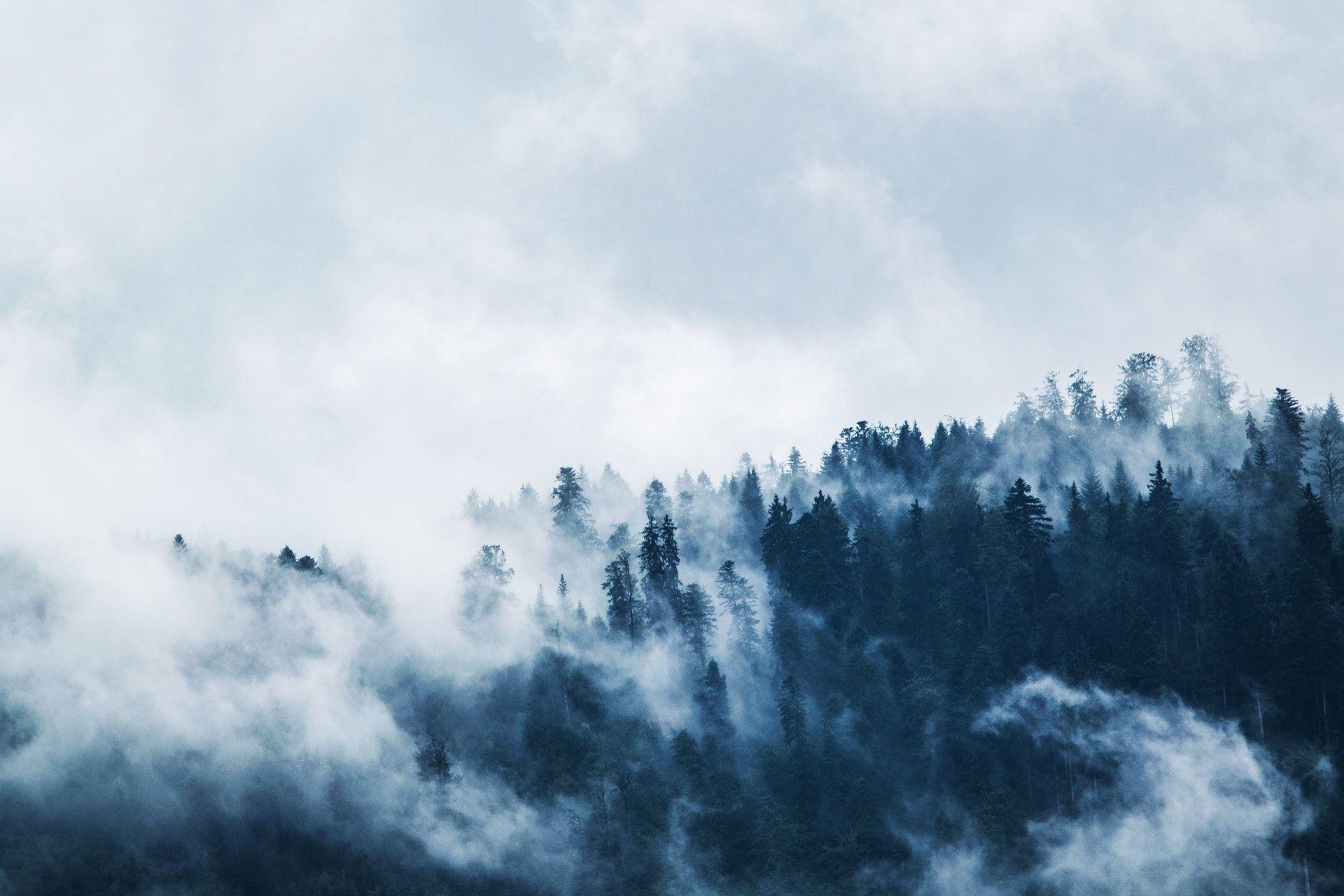 عکس زمینه درختان کاج سبز در مه سفید پس زمینه