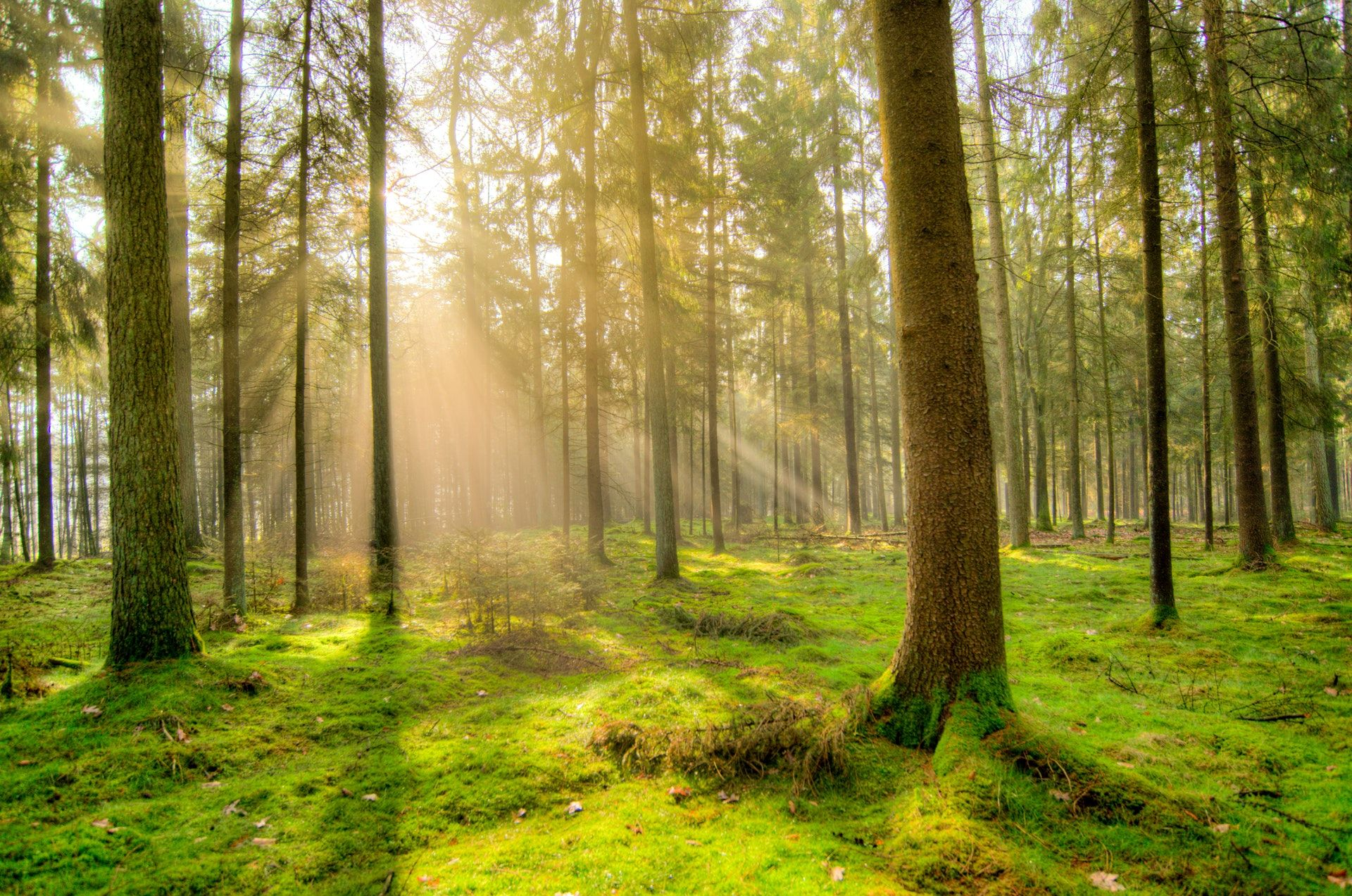 عکس زمینه تنه درختان جنگل سبز پس زمینه
