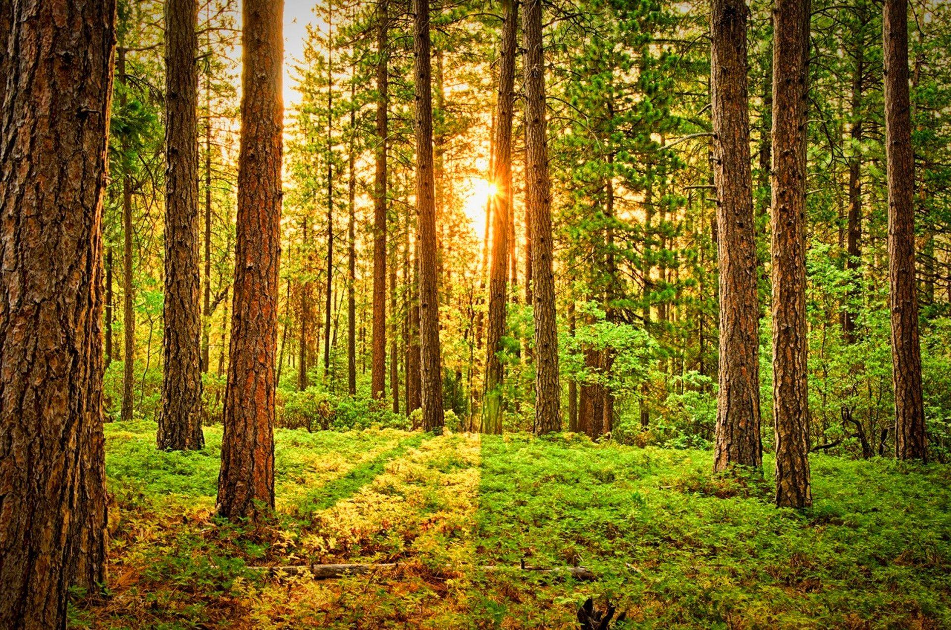 عکس زمینه تابش نور خورشید میان درختان سبز پس زمینه