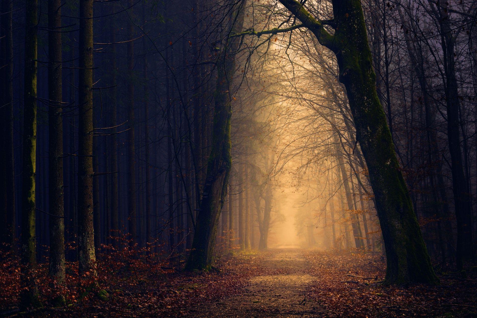 عکس زمینه درختان در مسیر تاریک و روشن جنگلی پس زمینه