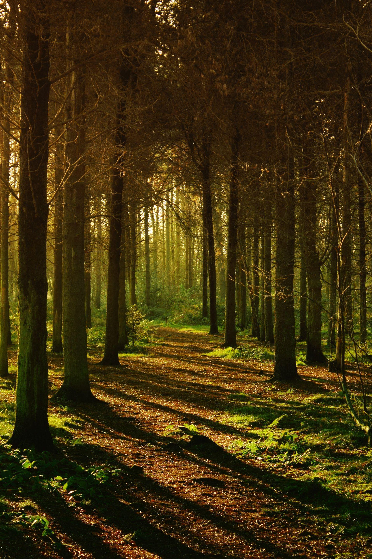 عکس زمینه جنگل خالی پس زمینه