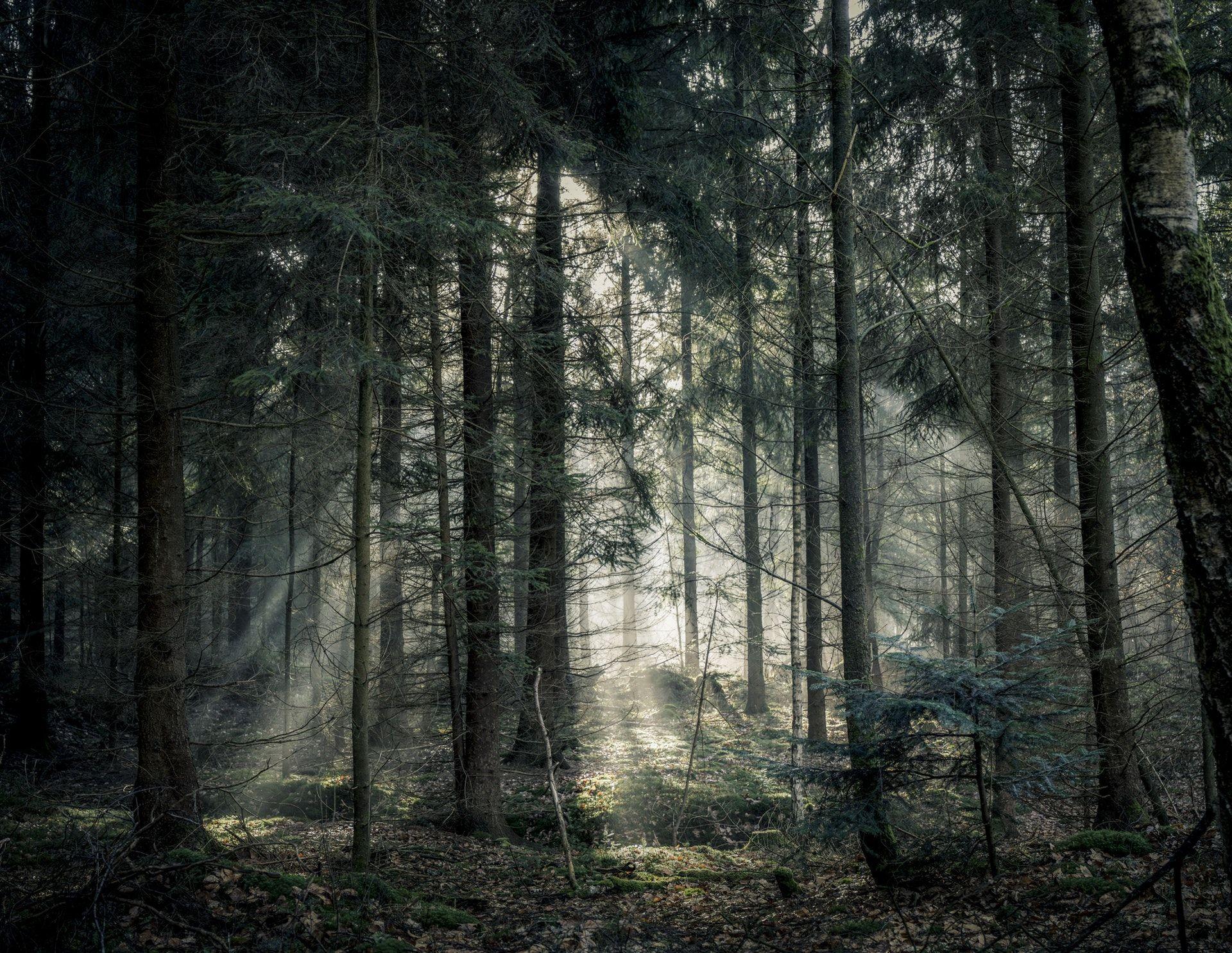 عکس زمینه درخت سبز جنگل تاریک پس زمینه