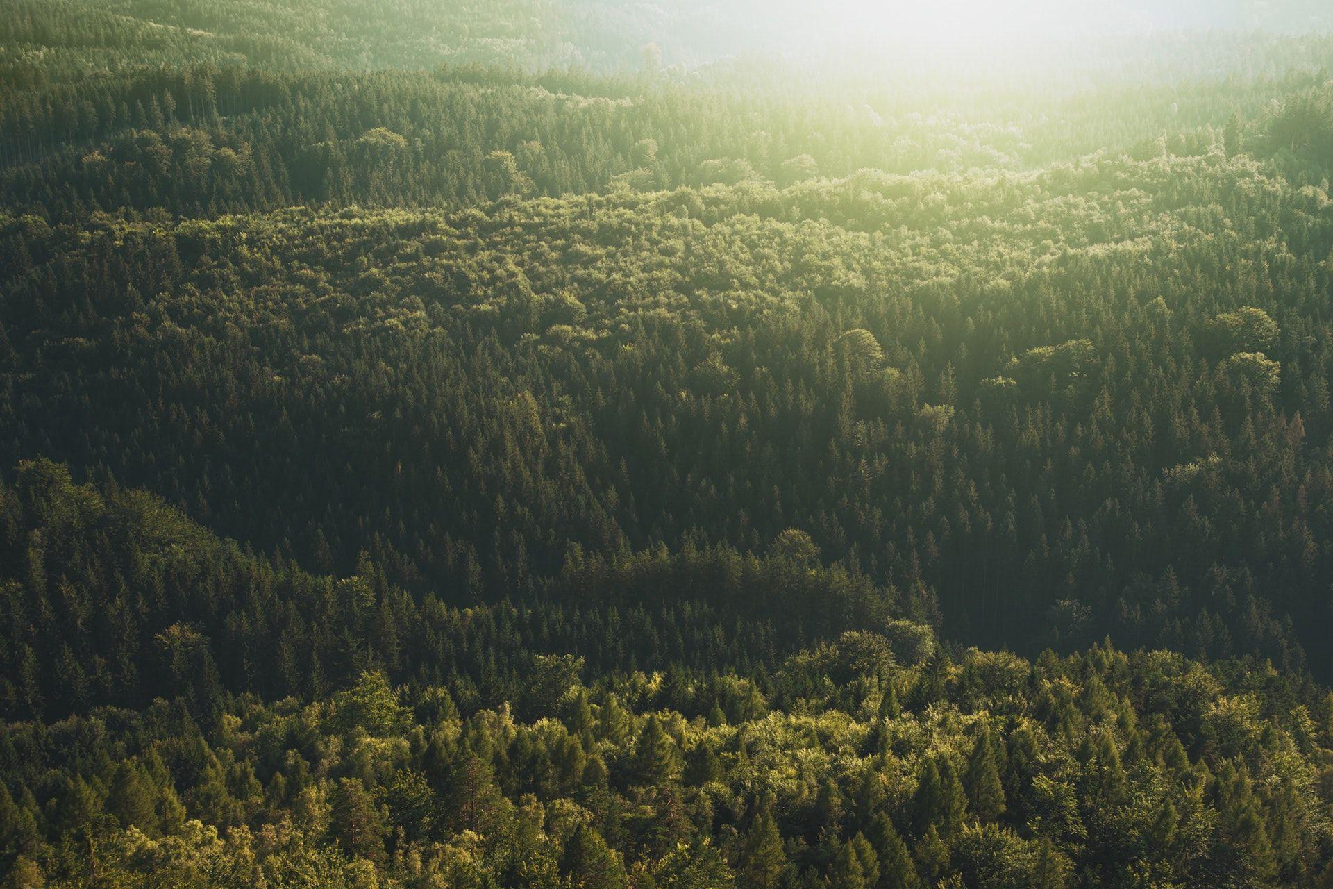 عکس زمینه جنگل پر از درختان سبز پس زمینه