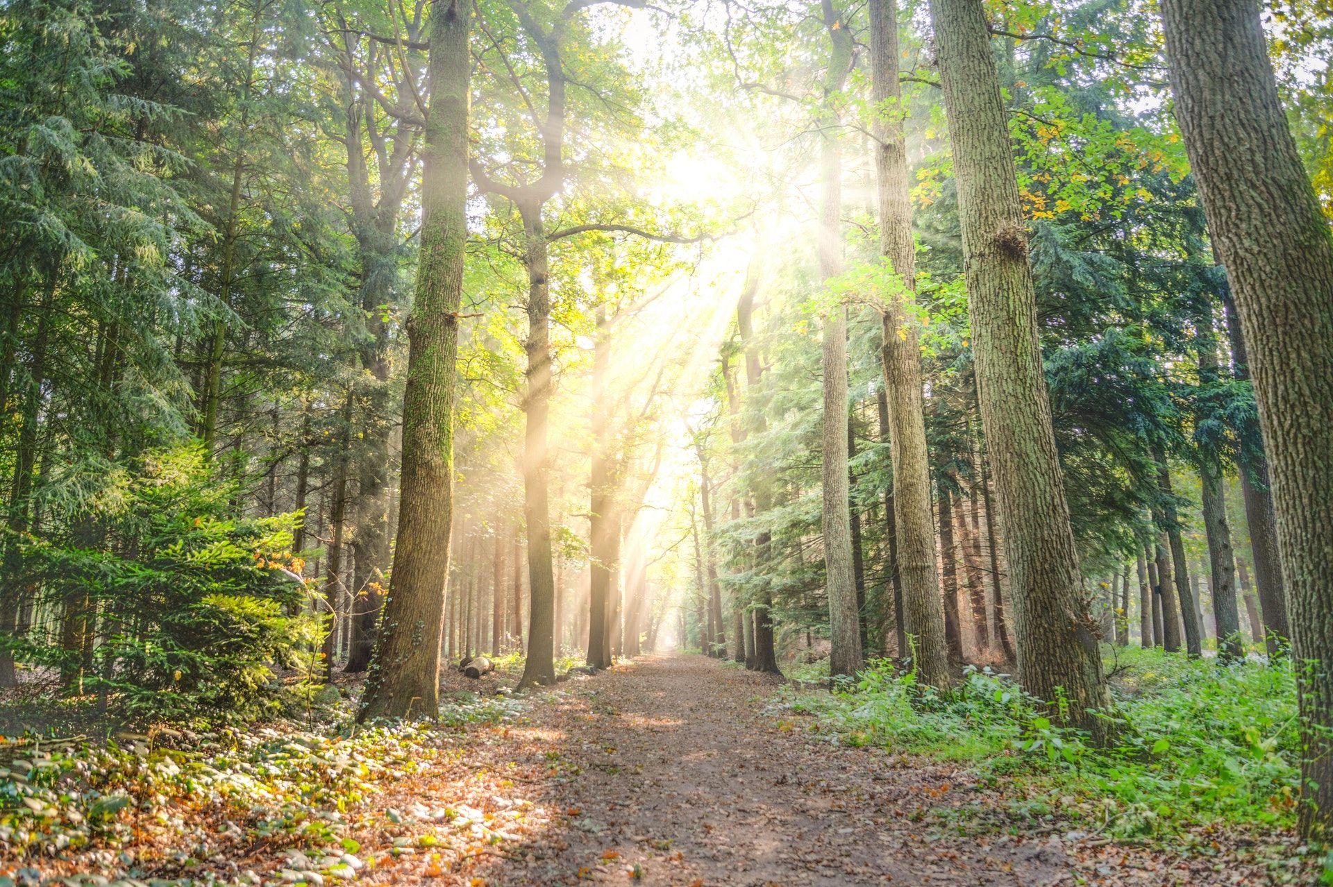 عکس زمینه مسیر بین برگ درختان به همراه تابش نور شیدید پس زمینه