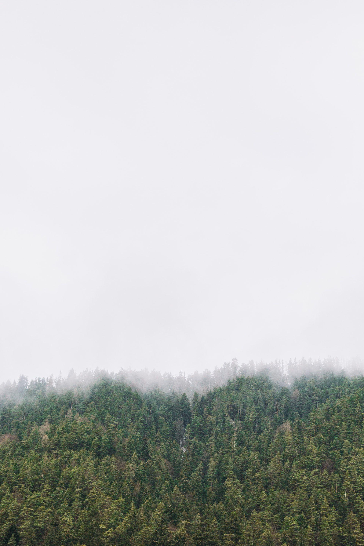 عکس زمینه جنگل مه آلود پس زمینه