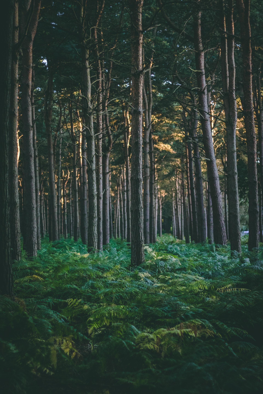 عکس زمینه جنگل سبز پر درخت پس زمینه