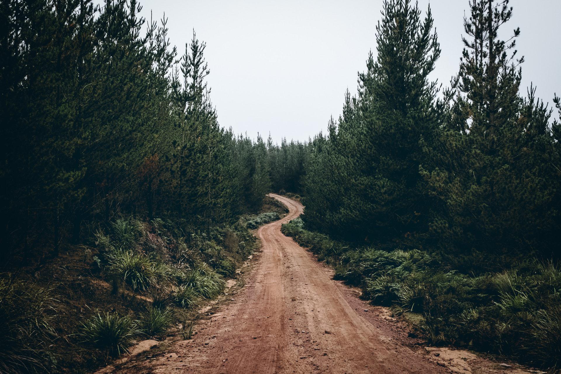 عکس زمینه جاده خاکی در میان درختان جنگلی پس زمینه