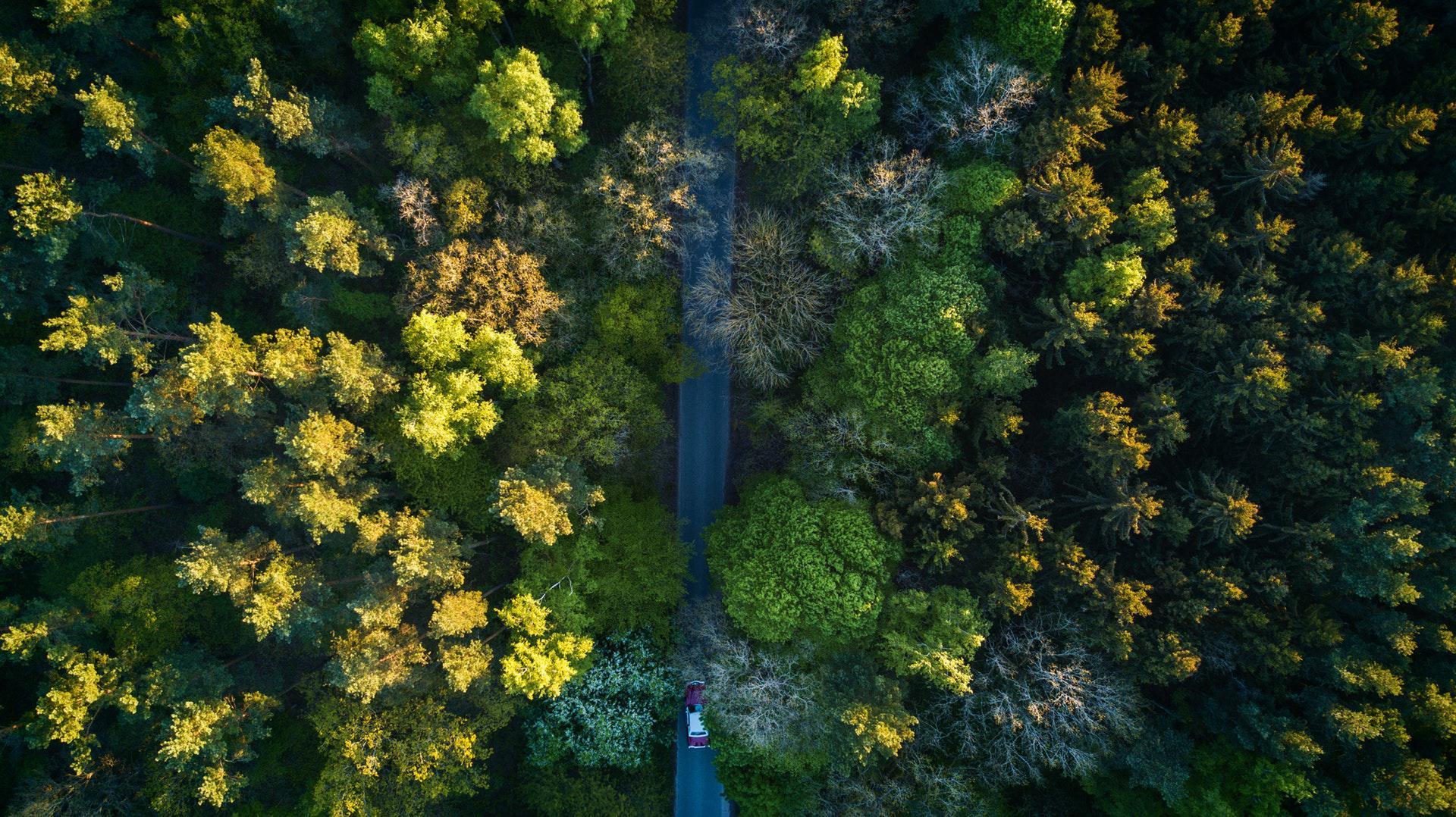 عکس زمینه جاده در وسط جنگل زیبا پس زمینه
