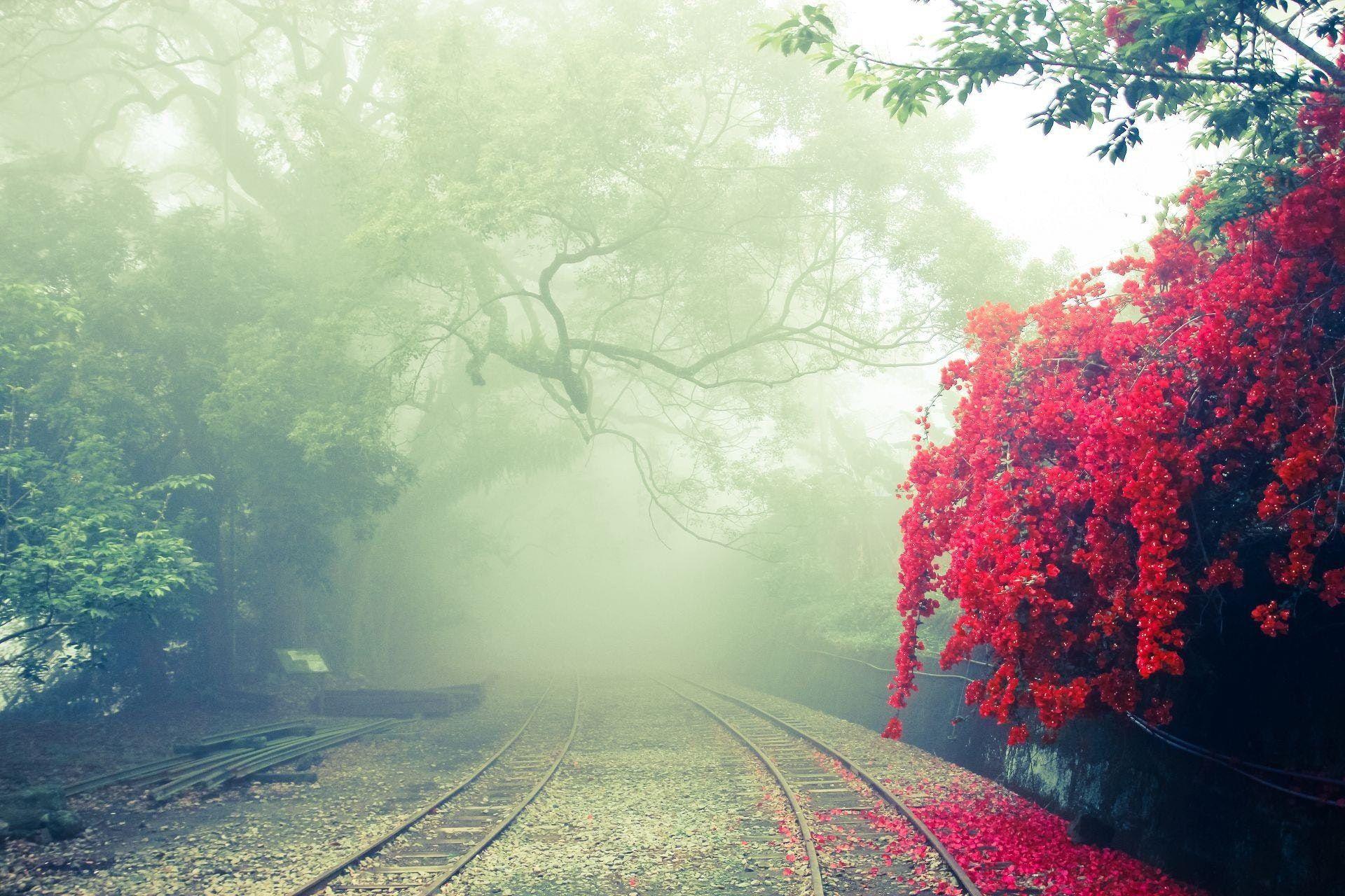 عکس زمینه ریل راه آهن در مه بهاری پس زمینه