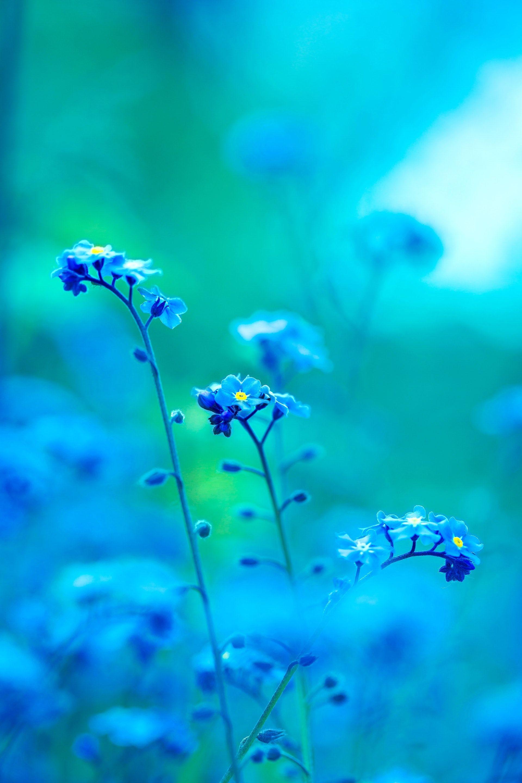 عکس زمینه گل بنفش آبی و سبز پس زمینه