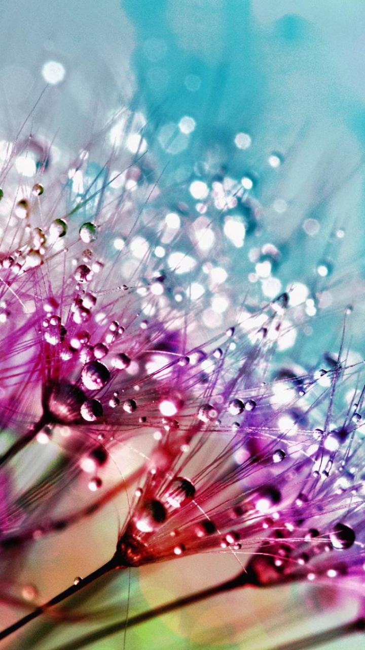 عکس زمینه گل ابریشم بنفش با قطره های شبنم پس زمینه