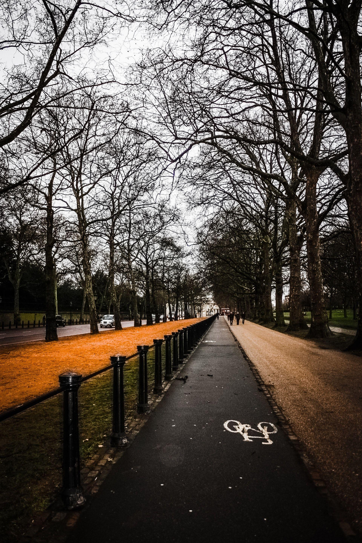 عکس زمینه جاده دوچرخه سواری در امتداد درختان زمستانی پس زمینه
