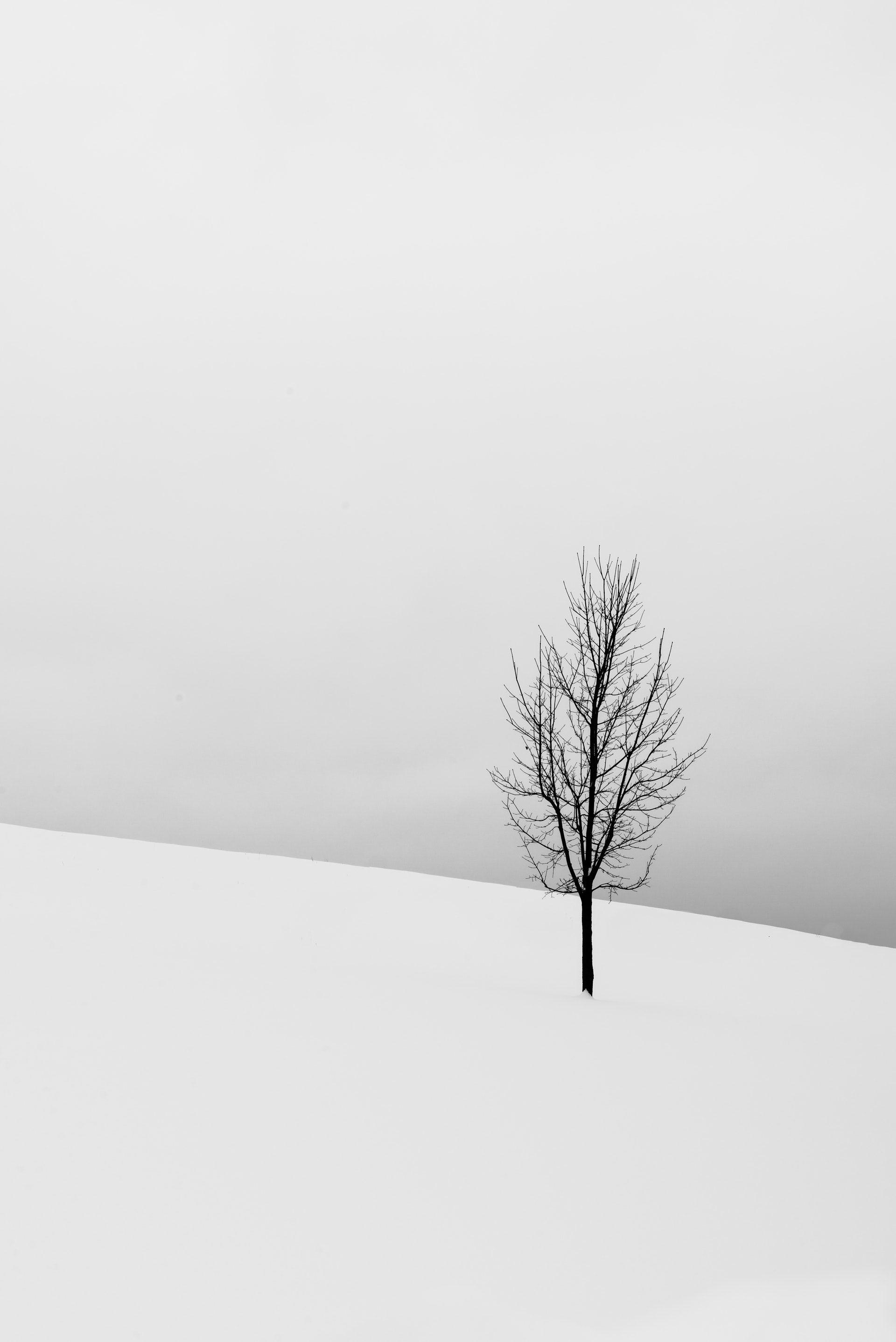 عکس زمینه درخت برهنه در پوشش برف پس زمینه