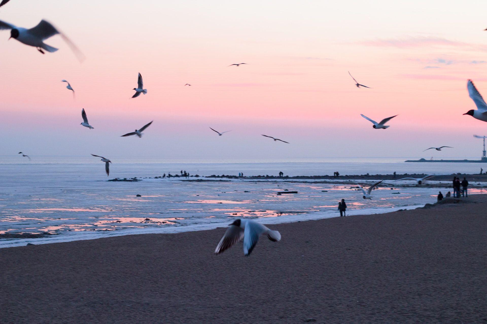 عکس زمینه عکس از پرواز پرندگان در ساحل پس زمینه