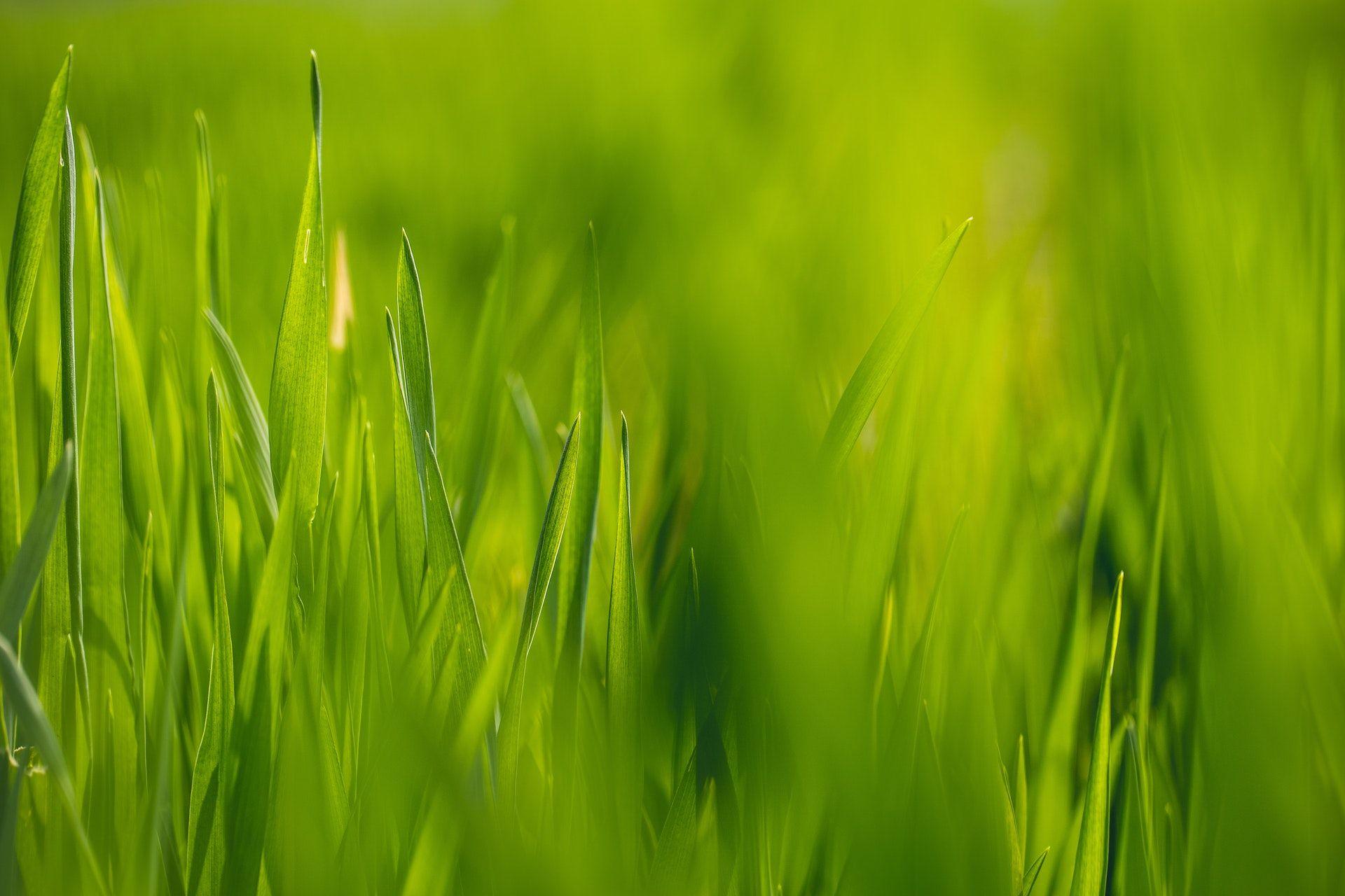 عکس زمینه چمن سبز زیبا پس زمینه