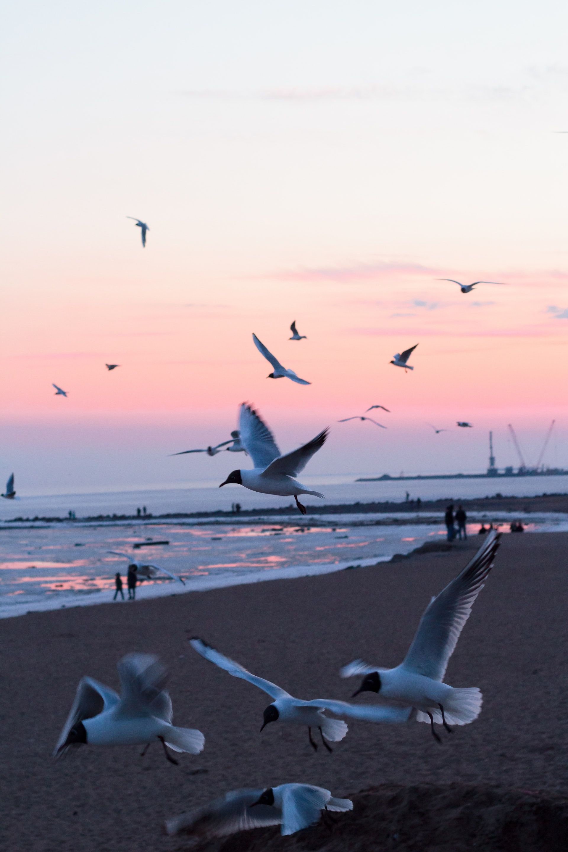 عکس زمینه پرواز پرندگان درغروب ساحل پس زمینه