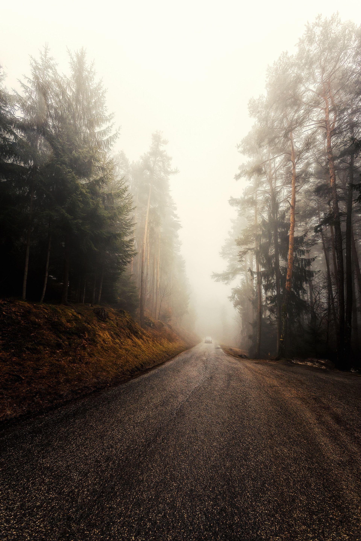 عکس زمینه جاده مه آلود جنگلی سرد پس زمینه