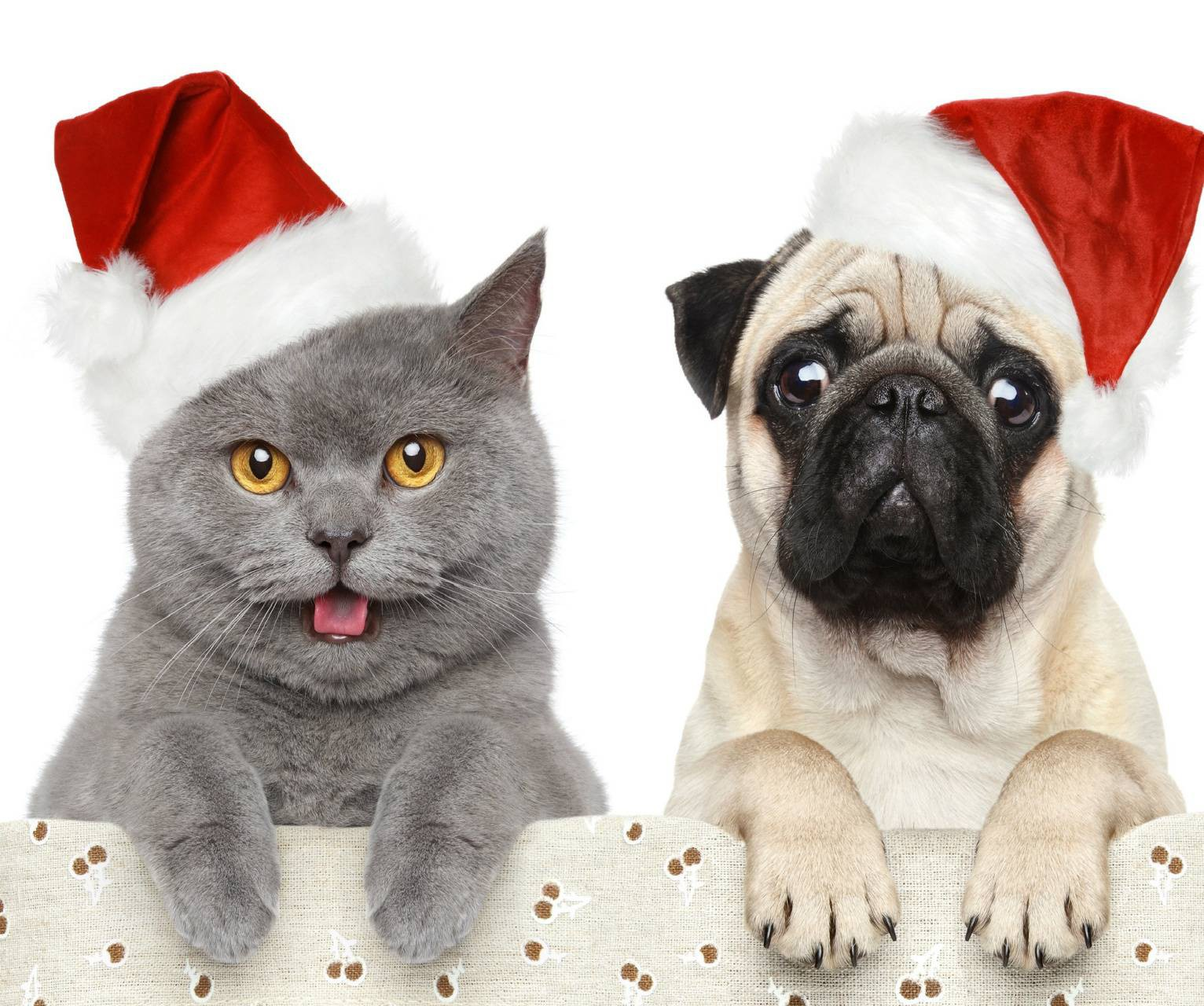 عکس زمینه گربه و سگ با کلاه کریسمس پس زمینه